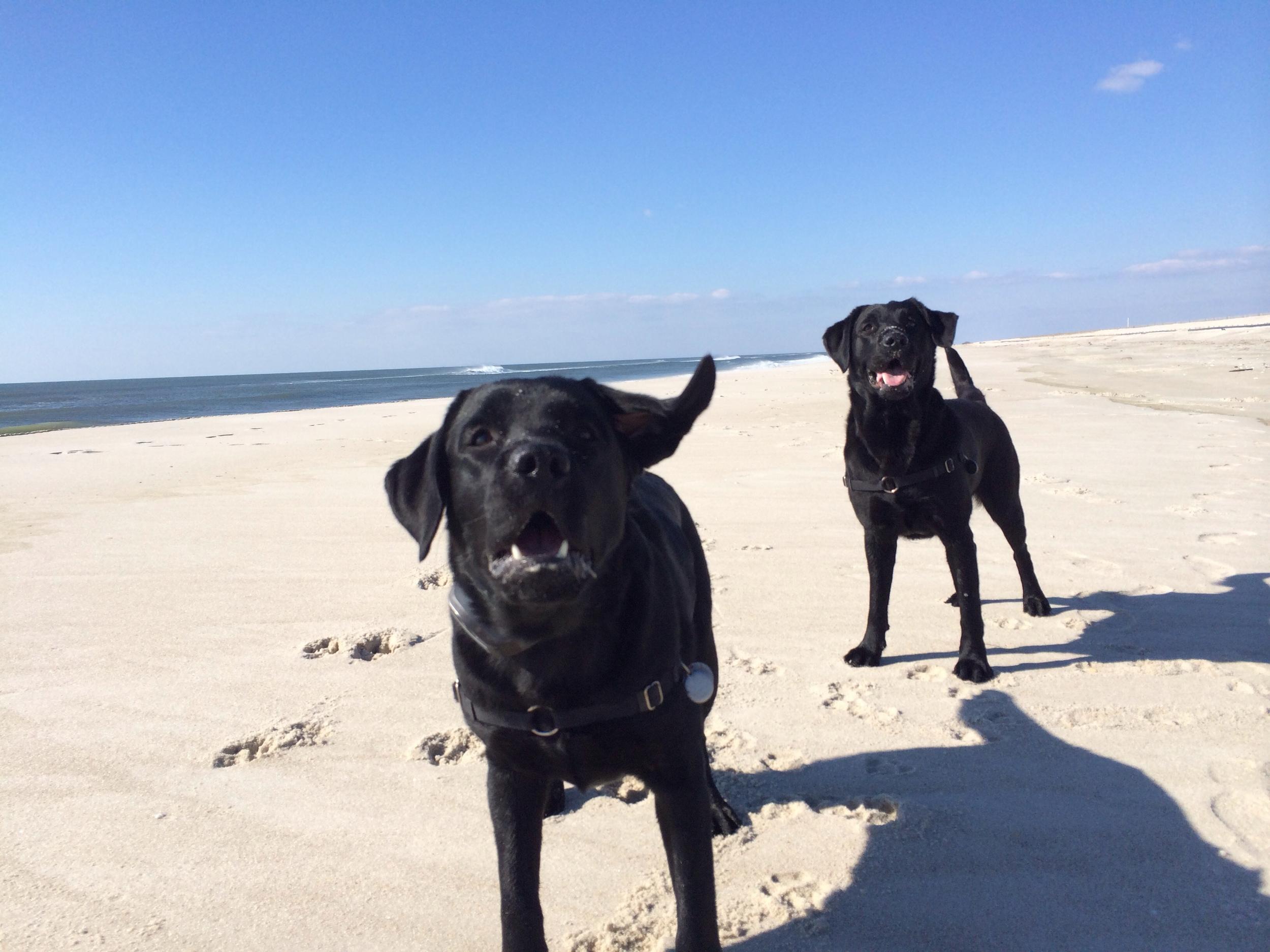 Happy Dogs, Happy Mum