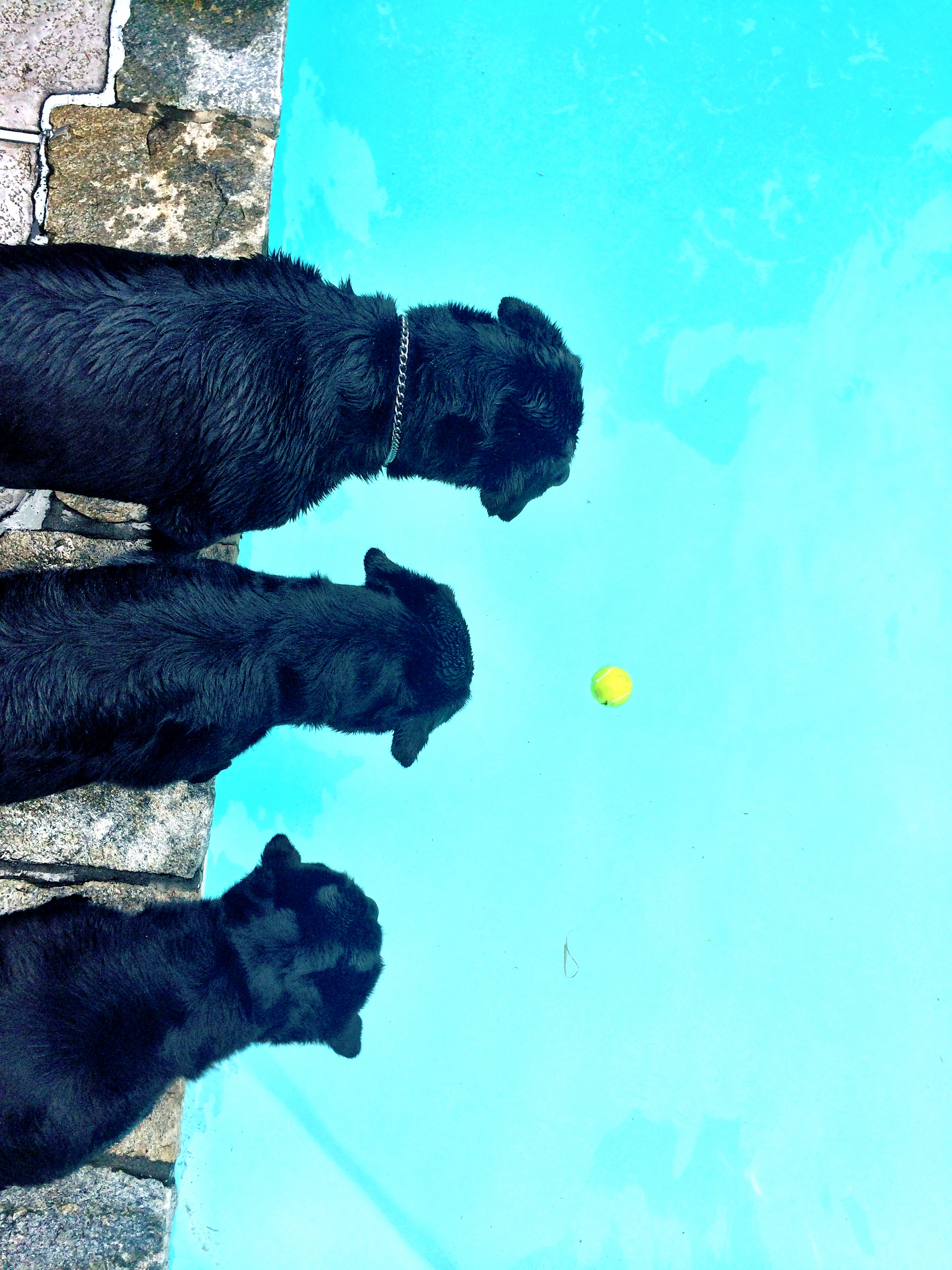 Many a tennis ball was retrieved this summer