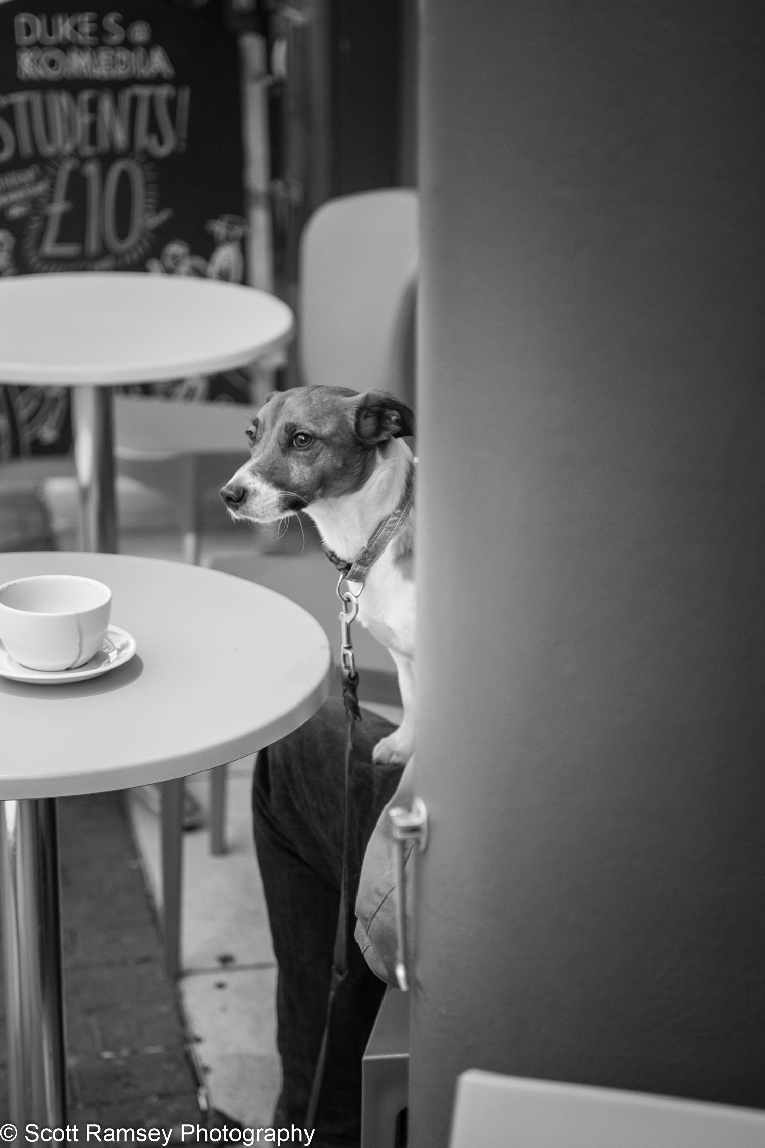 A dog sits on his owners lap outside a coffee shop in the Lanes, Brighton, East Sussex.