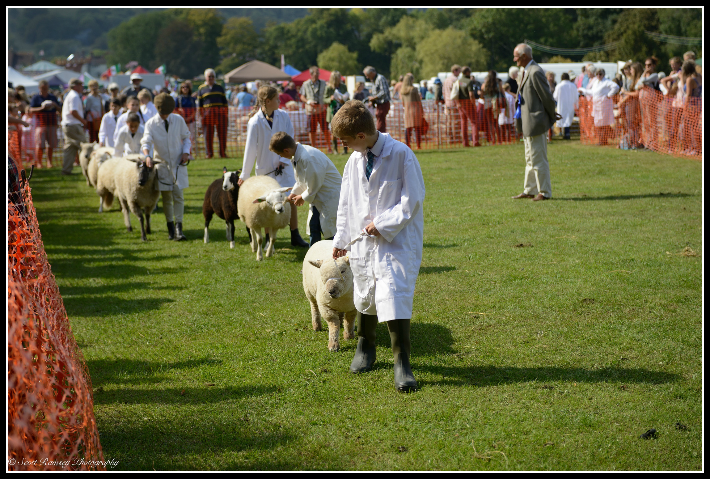 A judge inspects the sheep as they are walked around the main arena during a competition at the Findon Sheep Fair.