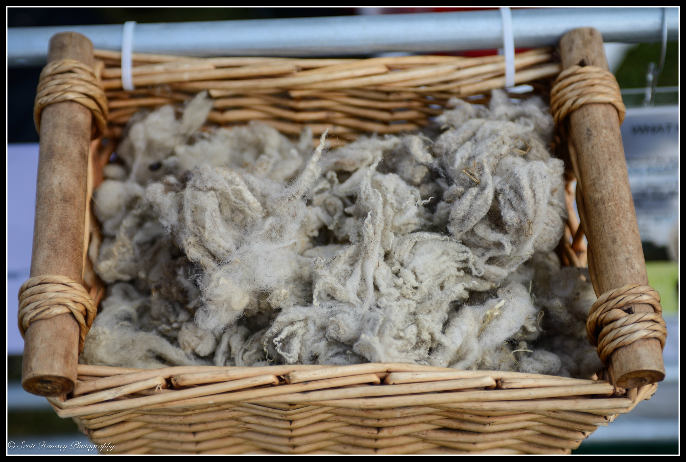 A basket containing sheeps fleece at the Findon Sheep Fair in West Sussex.