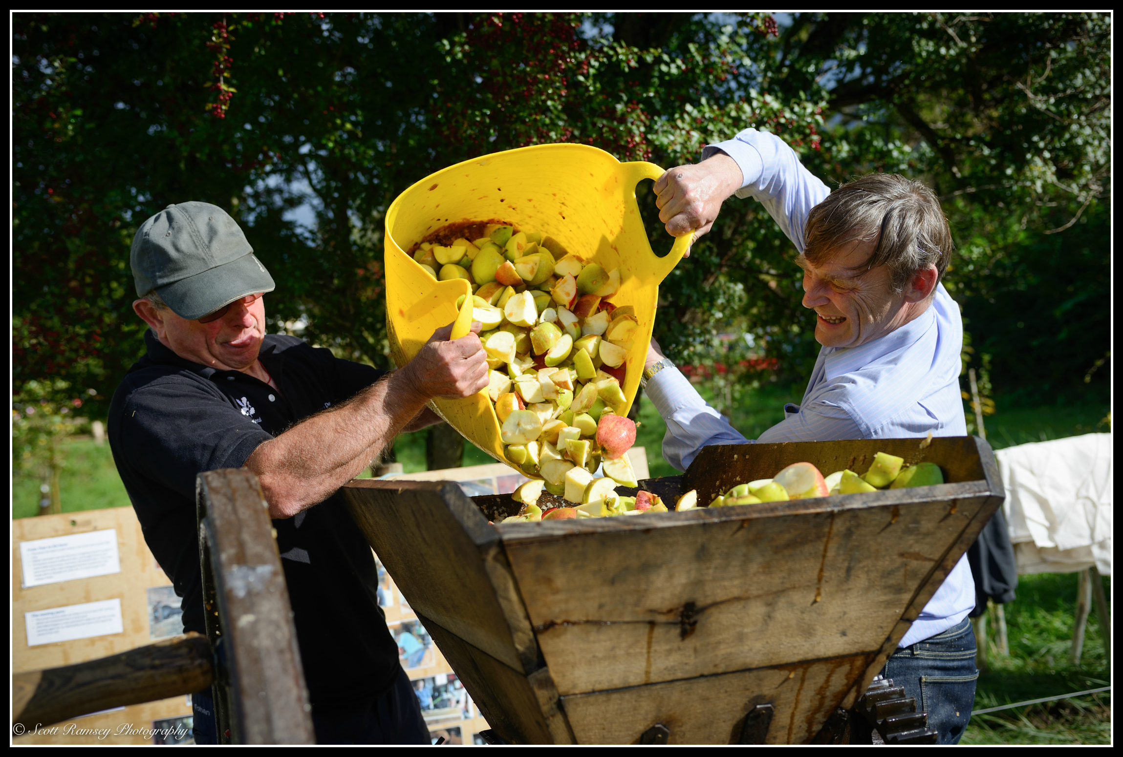 Volunteers tip apples into a large mulching machine before pressing the apples and producing apple juice at the Apple Day in Slindon, West Sussex.