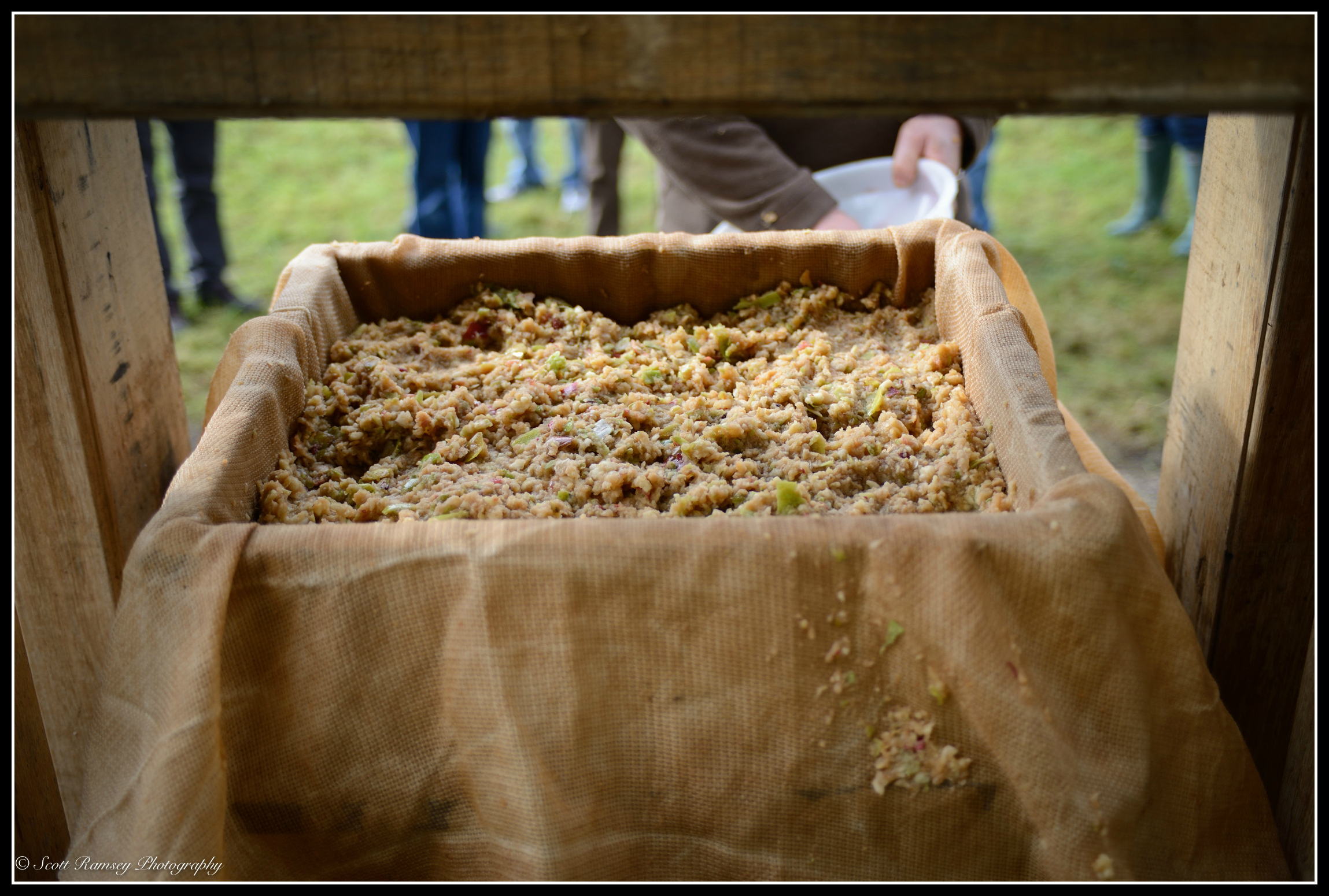 After mulching, the apple mixture is   spread and wrapped in hessian cloth on  a traditional rack and cloth oak cider press.