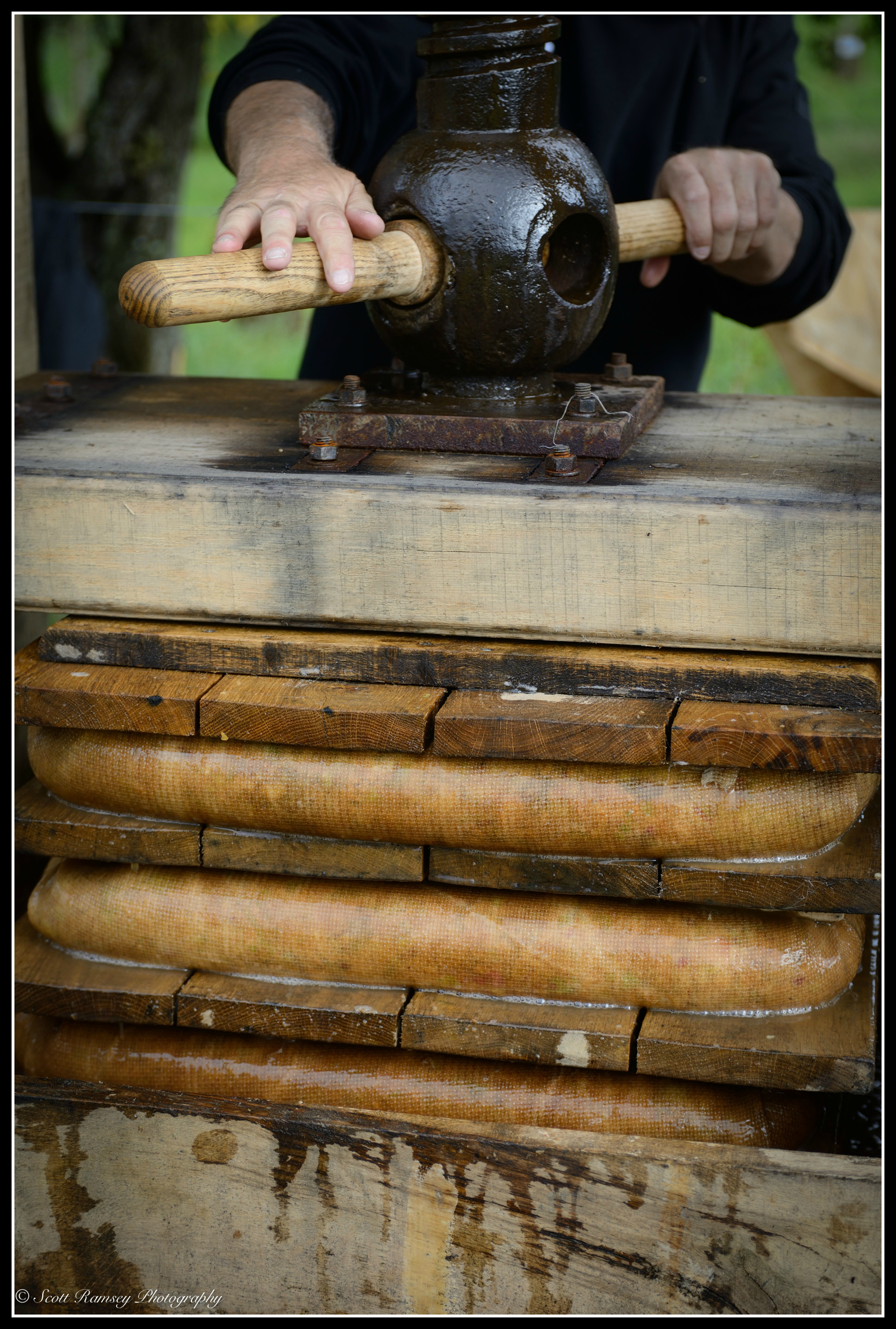 Hands turn a large screw squashing the apples wrapped in hessian cloth on a  traditional rack and cloth oak cider press.