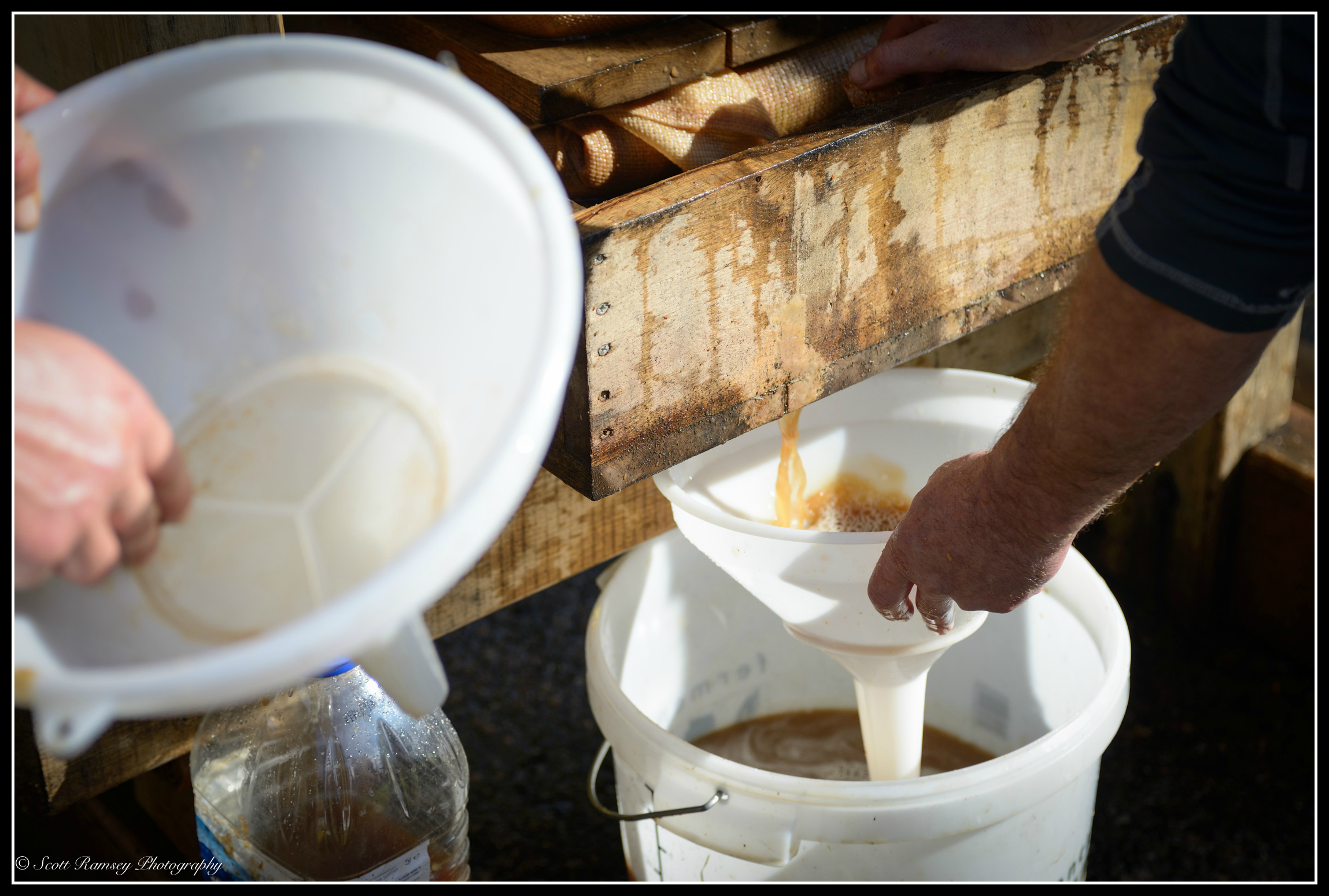 Just a trickle now, every last drop of the freshly squeezed apple juice is collected during the pressing process.