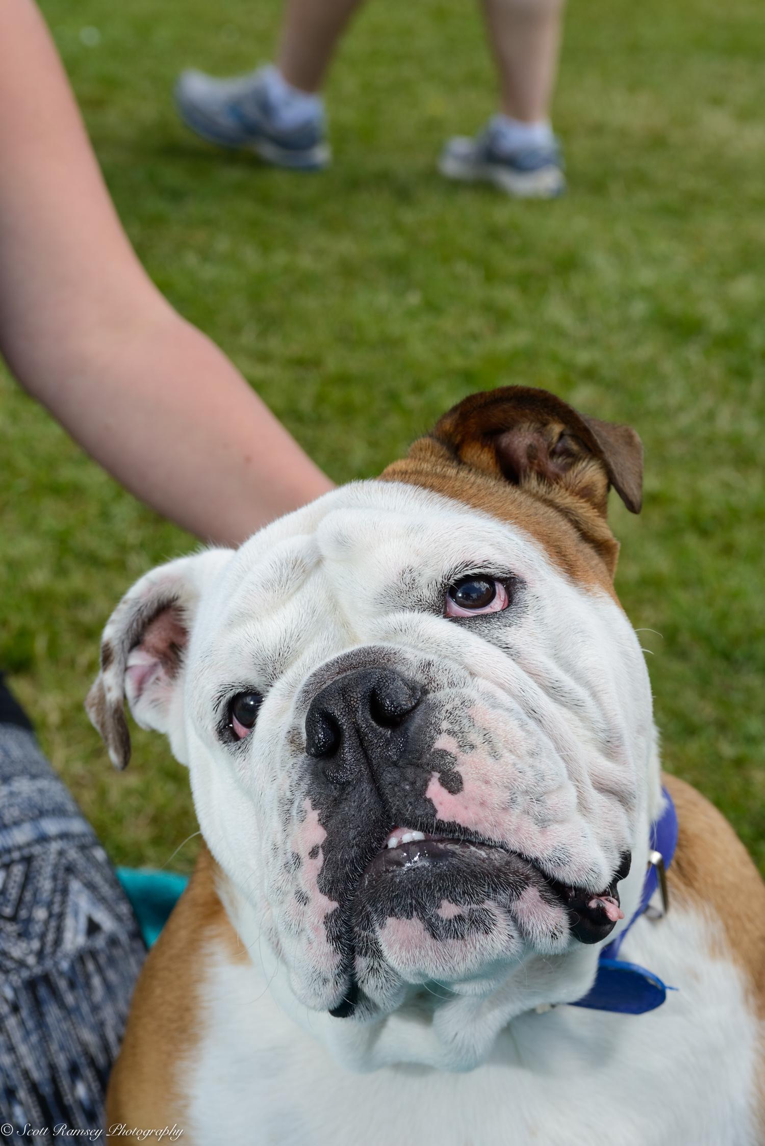 East Preston Dog Show