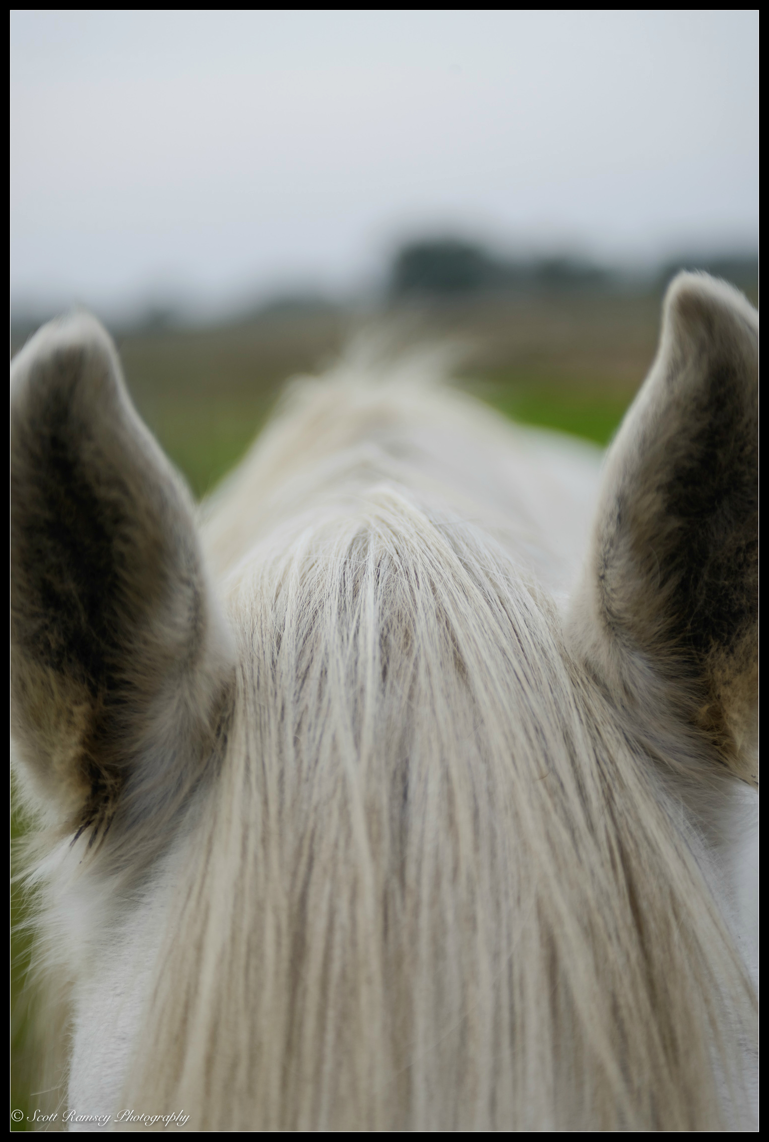A horses ears Photo © Scott Ramsey