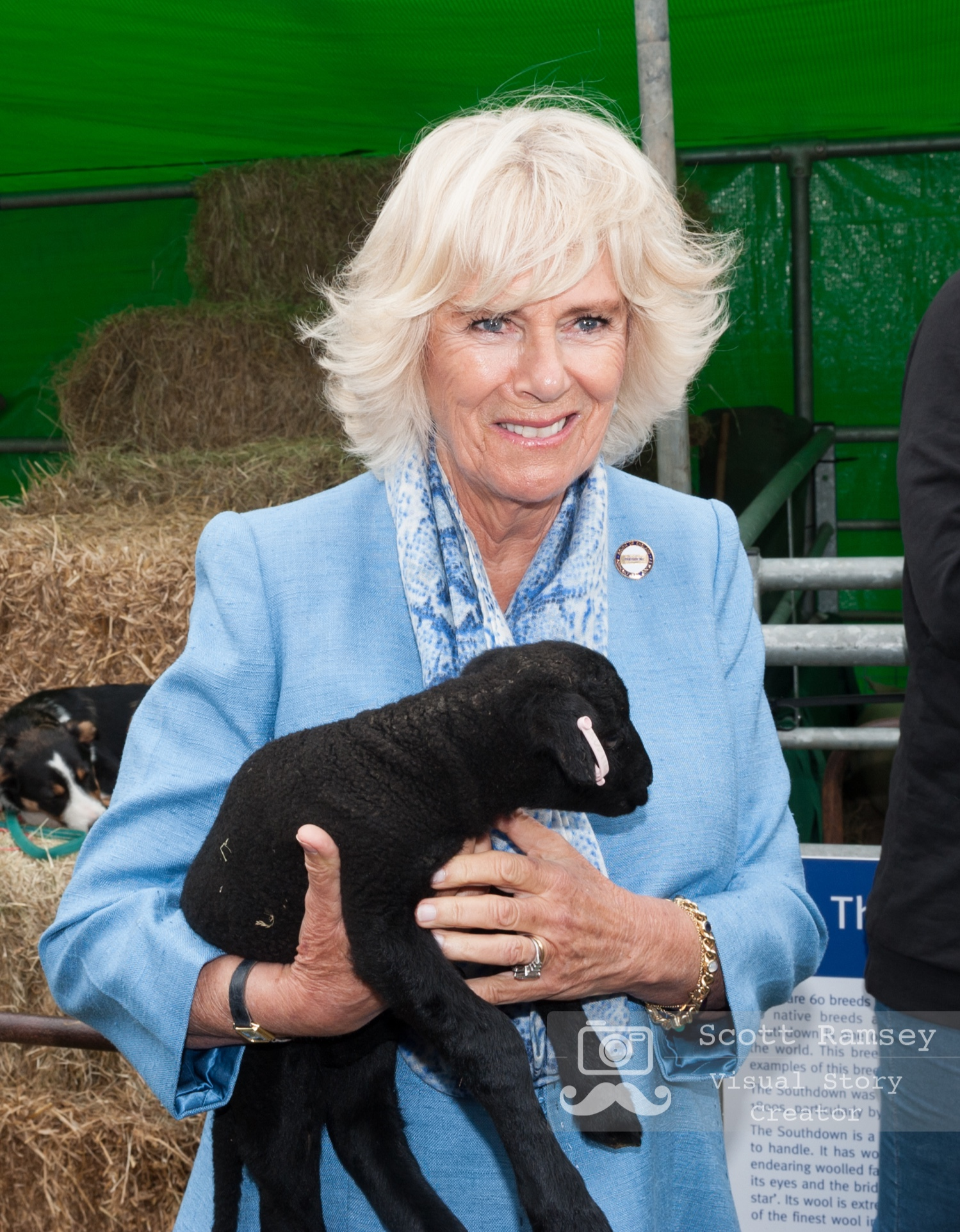 Brighton Photographer Scott Ramsey on assignment at the South Of England Show. HRH, The Duchess Of Cornwall, holds a newborn lamb during a visit to the South Of England Show. Photo © Scott Ramsey.