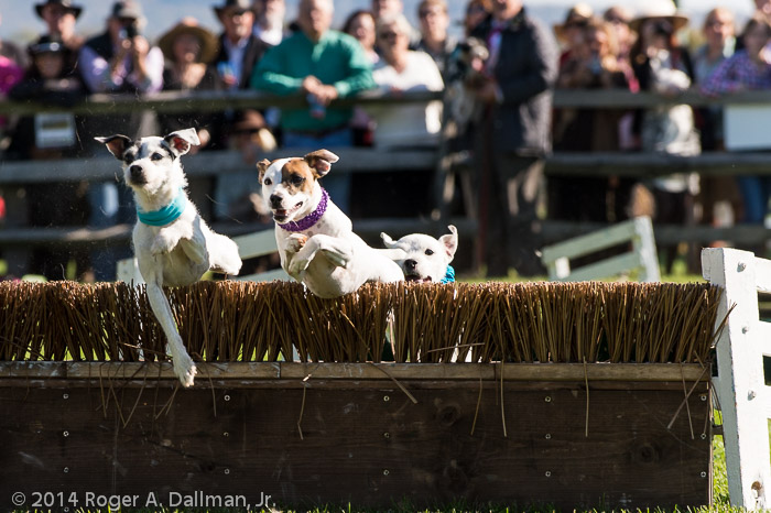 Even the dogs had hurdles to clear.