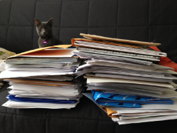 George looks over the RGP submission pile. George, and her sister Martha, are named for James Marshall's famous picture book hippos.