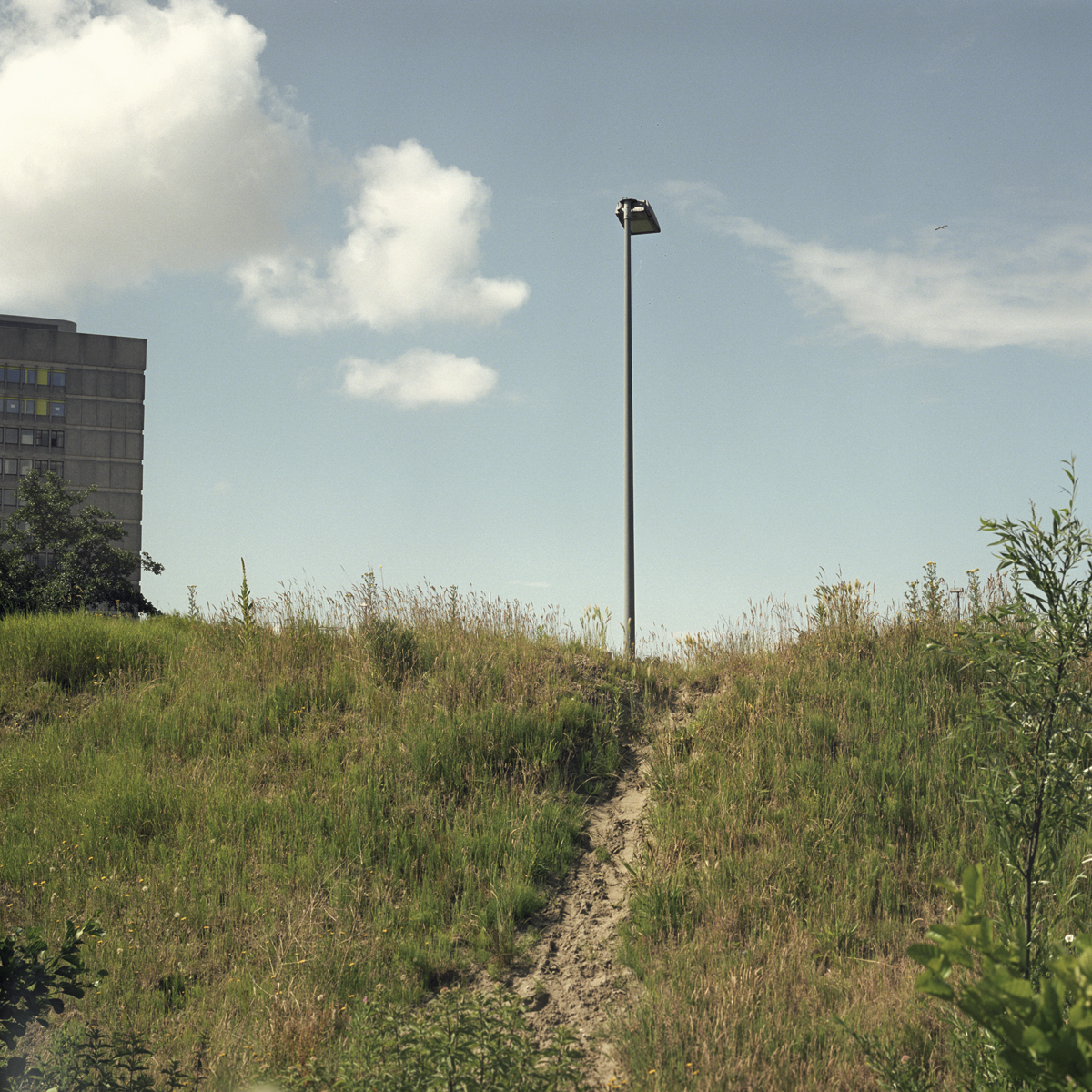 Path - Netherlands.jpg