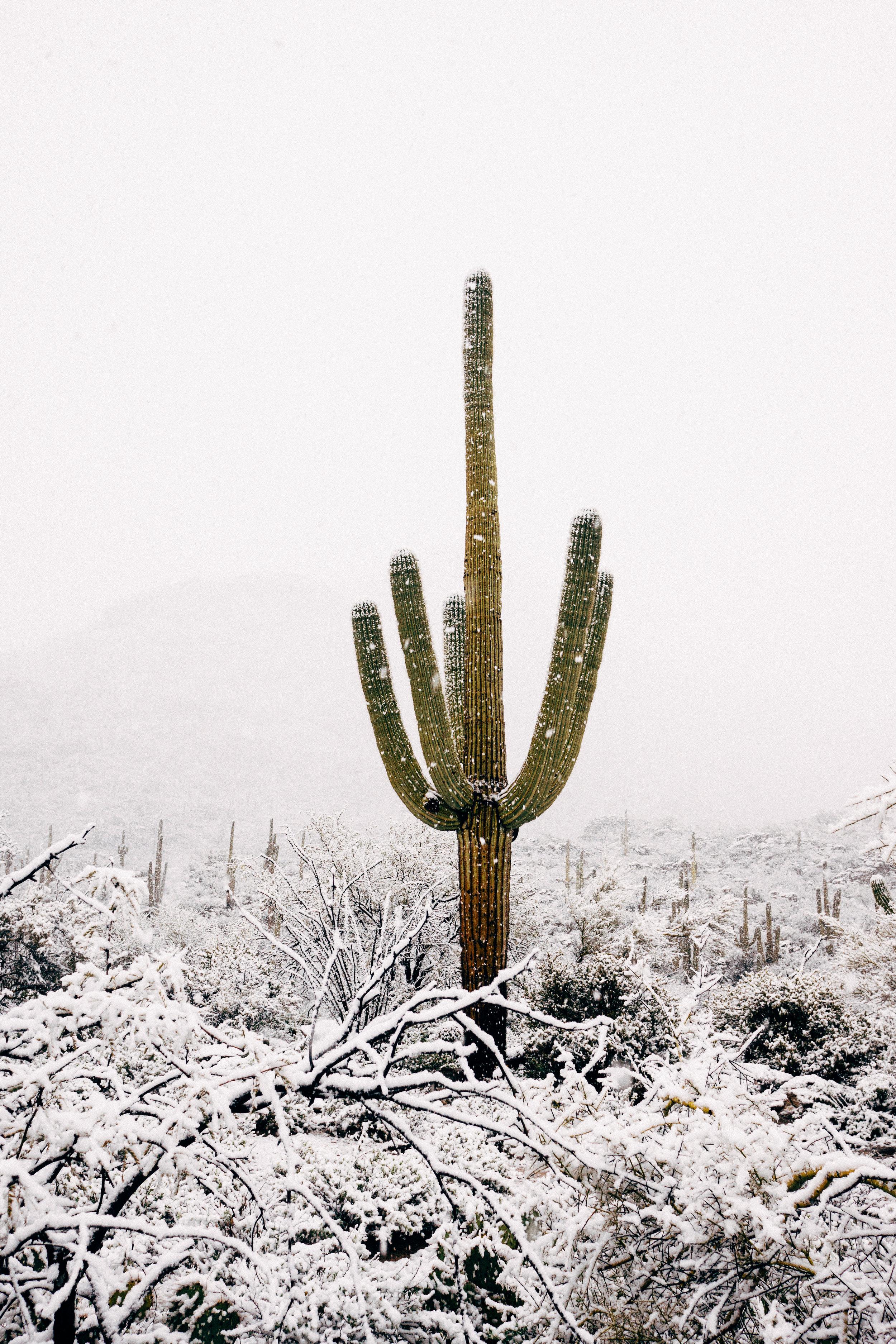 snowcactus-1.jpg