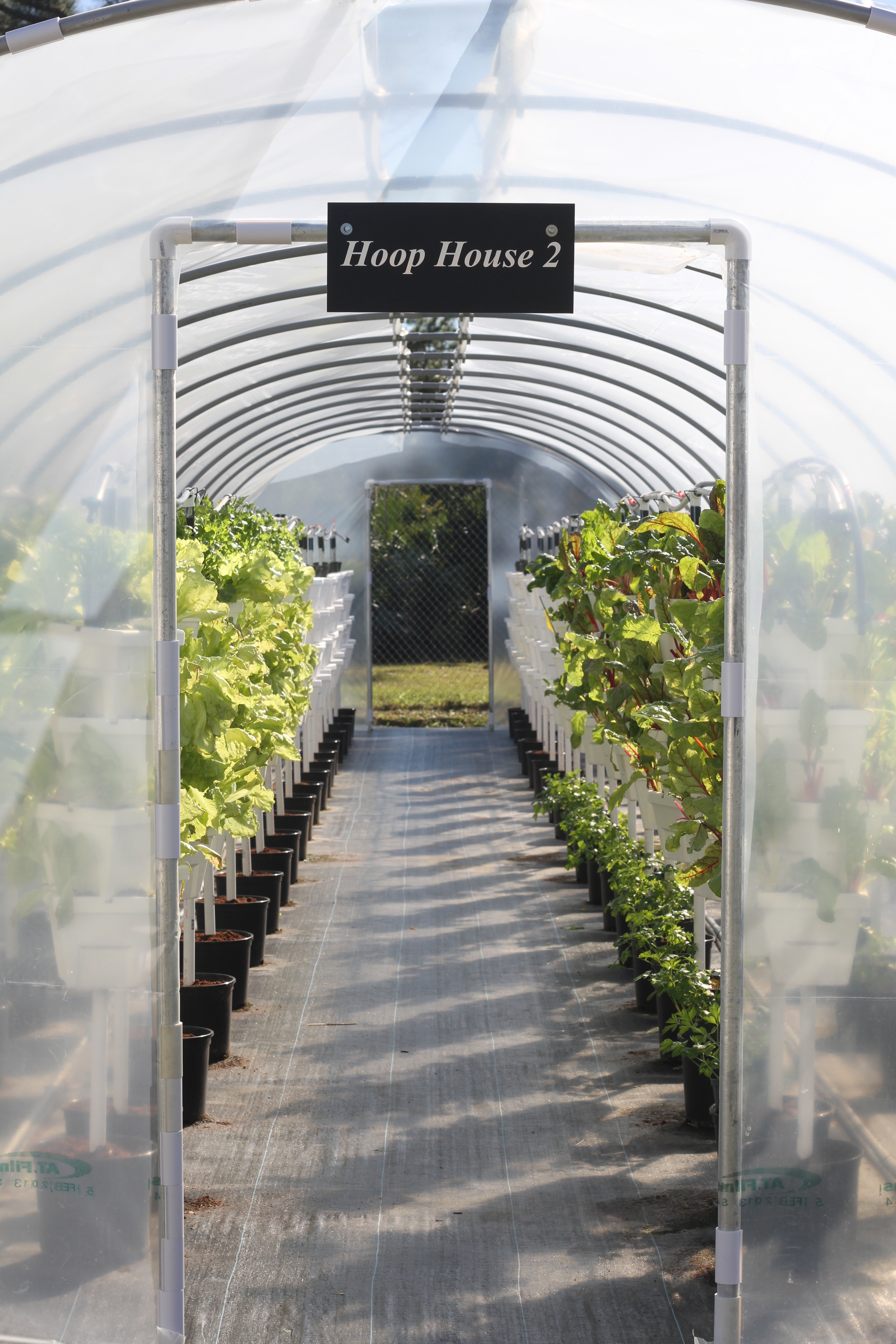 Hydro House with Chard and more.