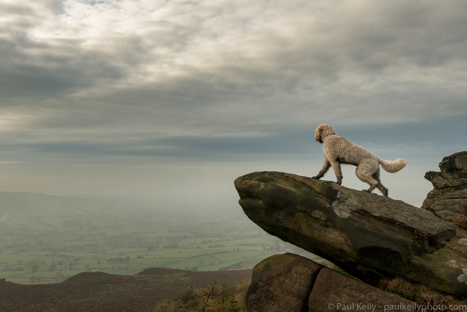 Labradoodle Cliff Rock.jpg