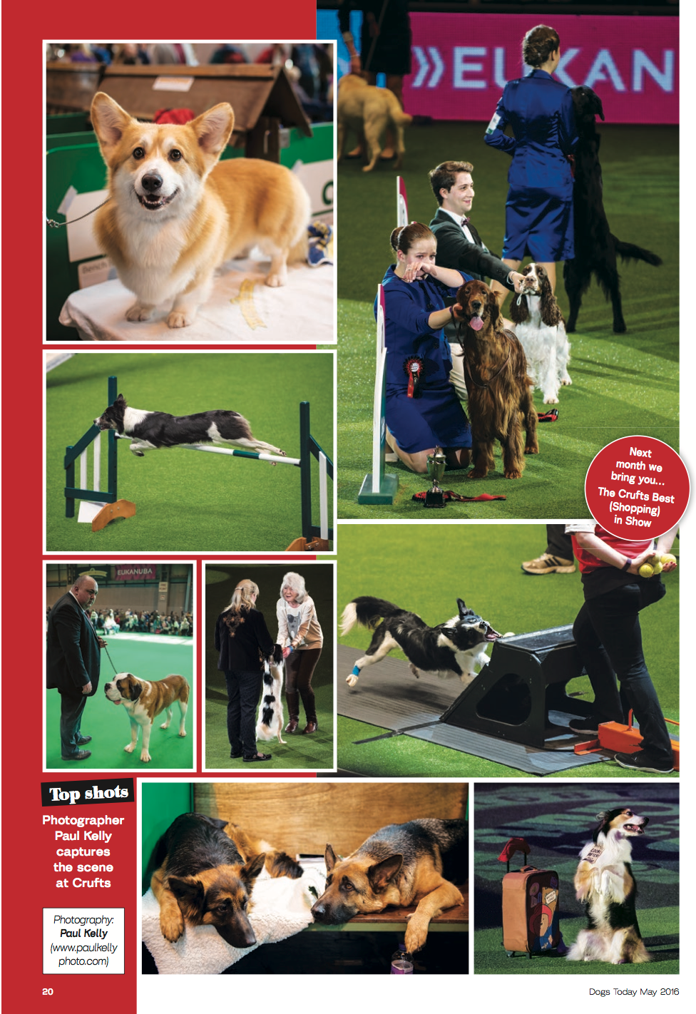 DogsToday-Crufts.png