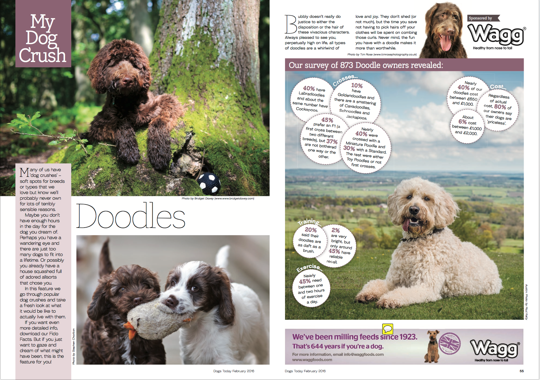 DogsToday-pg1.png