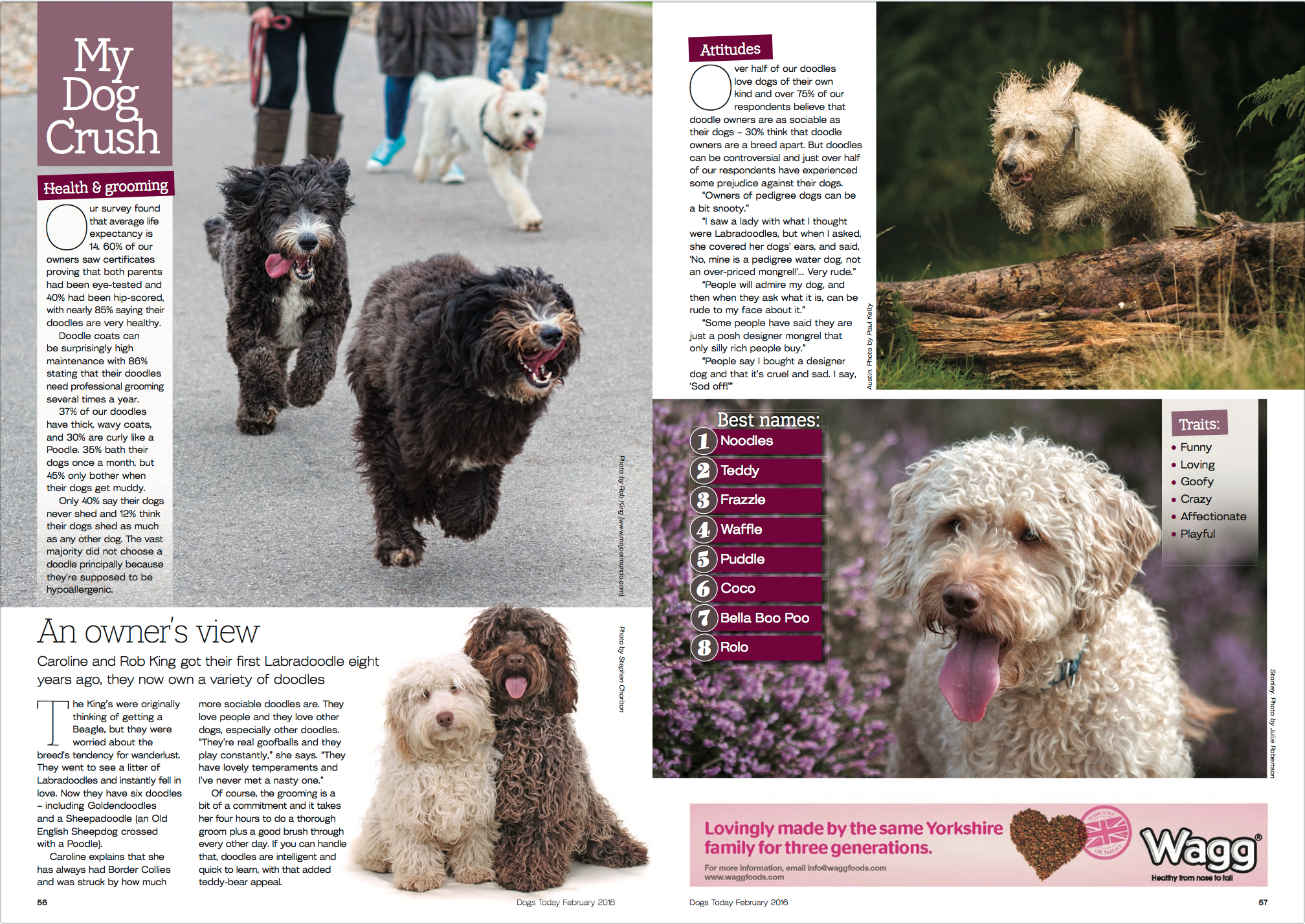 DogsToday-pg2.png