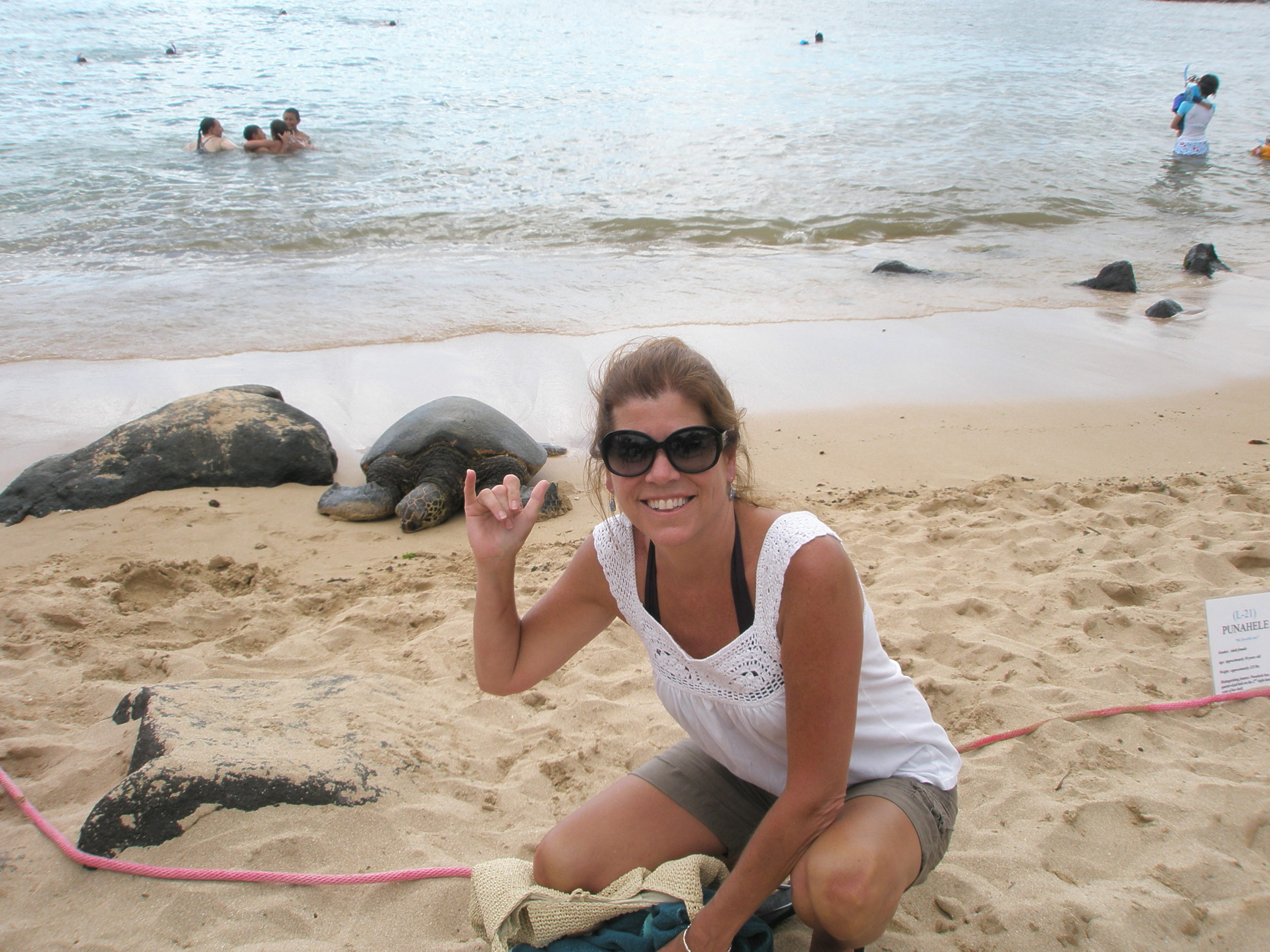 Hanging with seal turtles