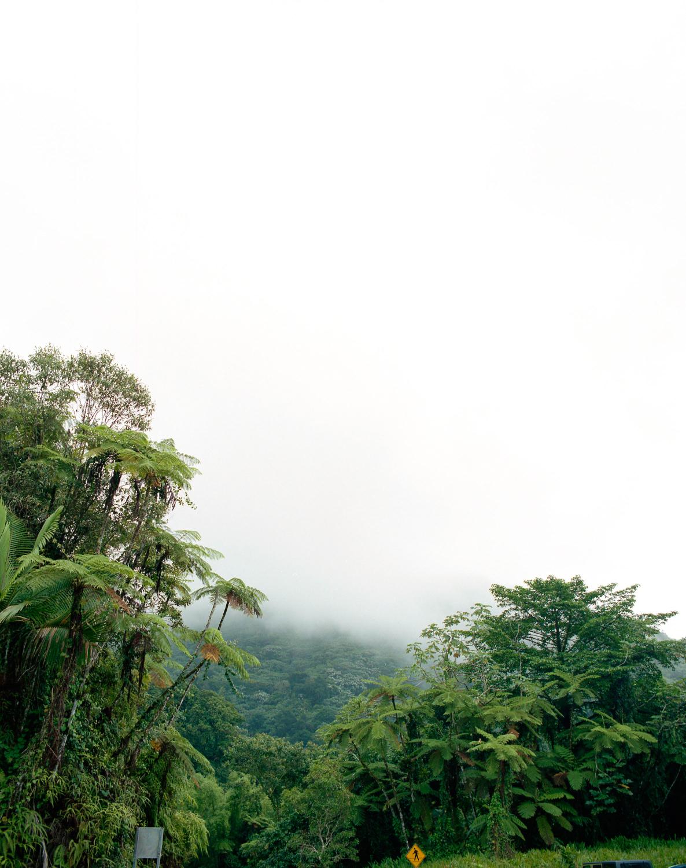 rainforestfade.jpg