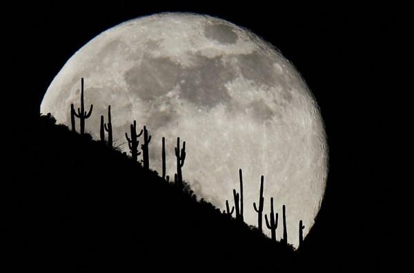 (Photo by Rob Schumacher/The Arizona Republic)