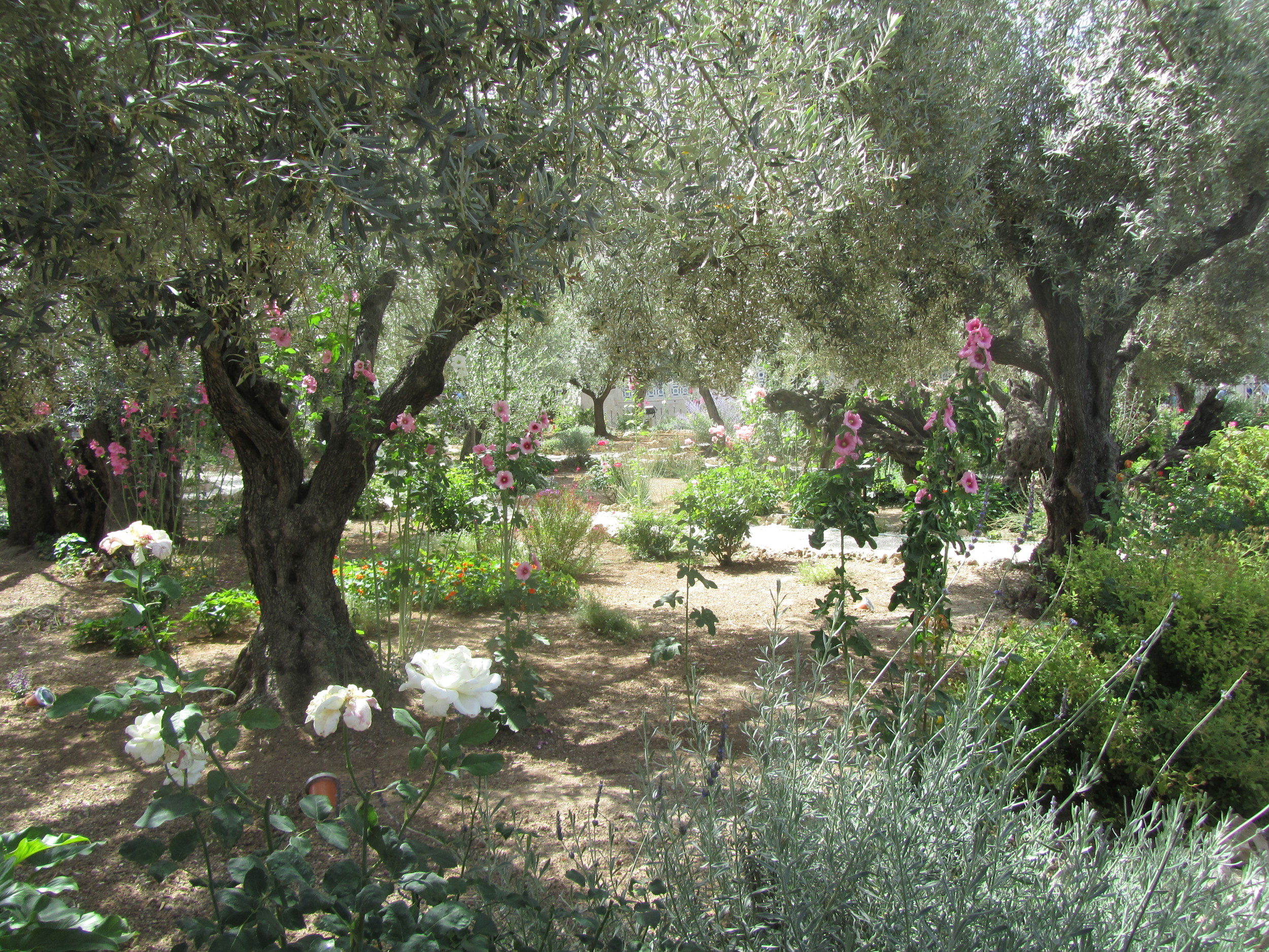 The Ancient Garden of Gethsemane