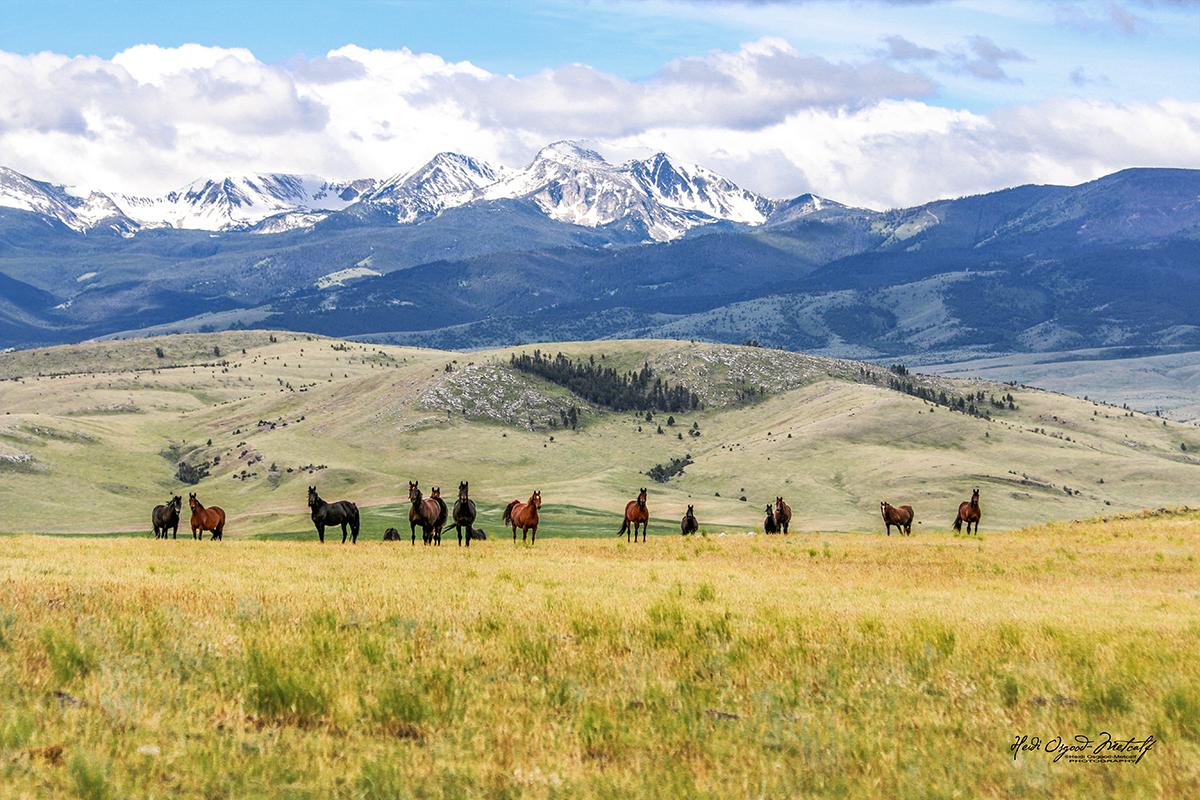 the mare pasture - img_0417.JPG
