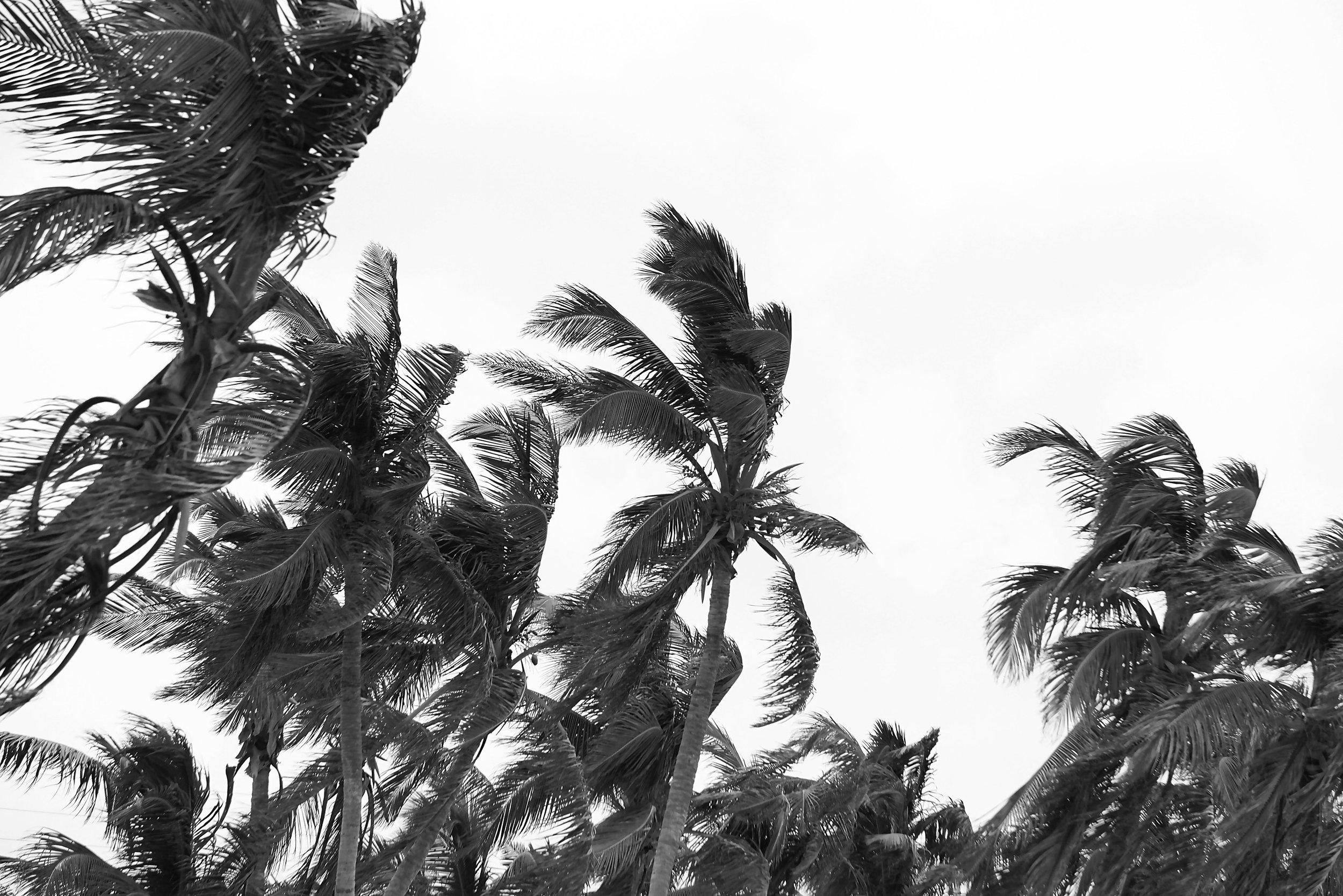 palm_tree_photography.JPG