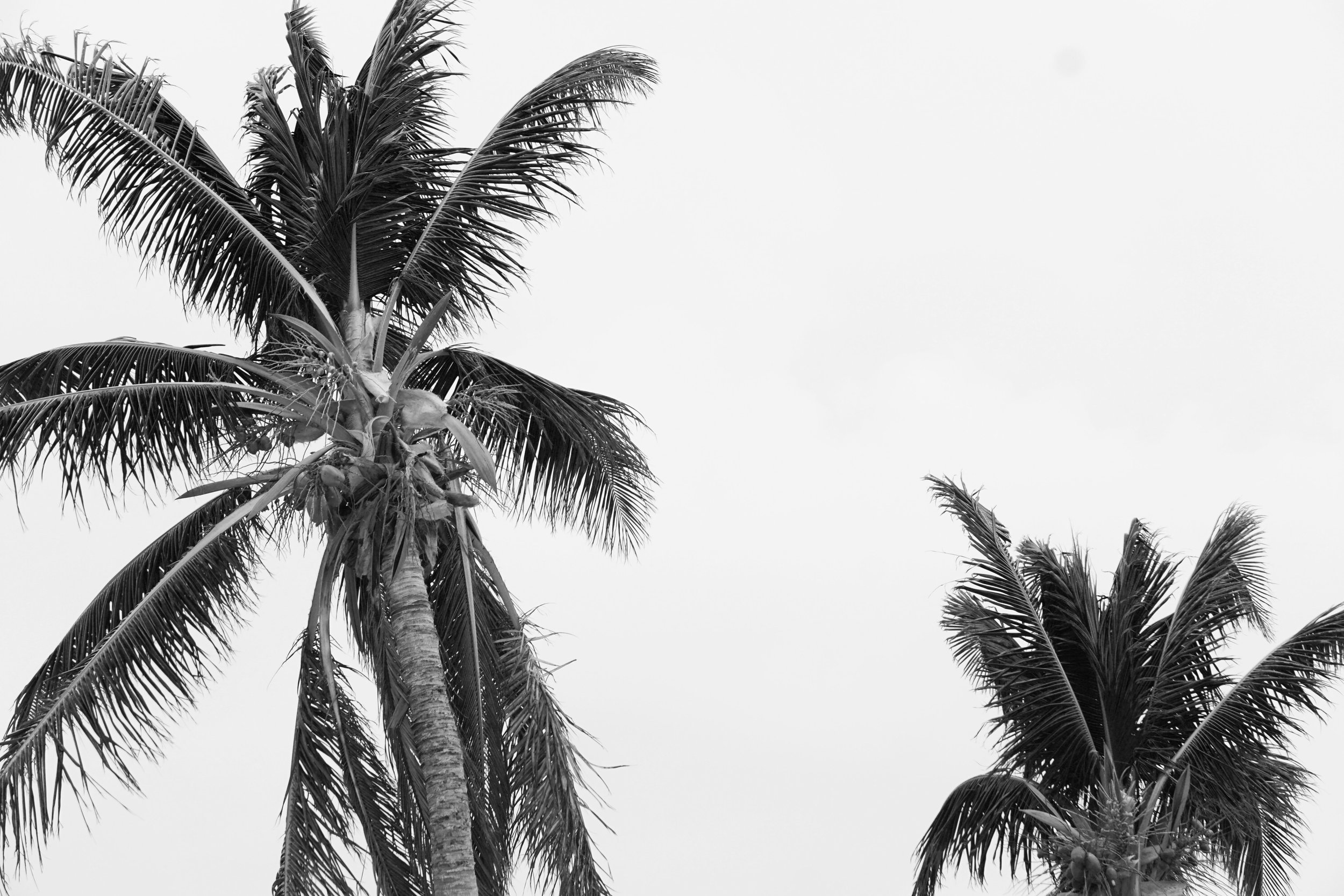 Palm Tree Photography