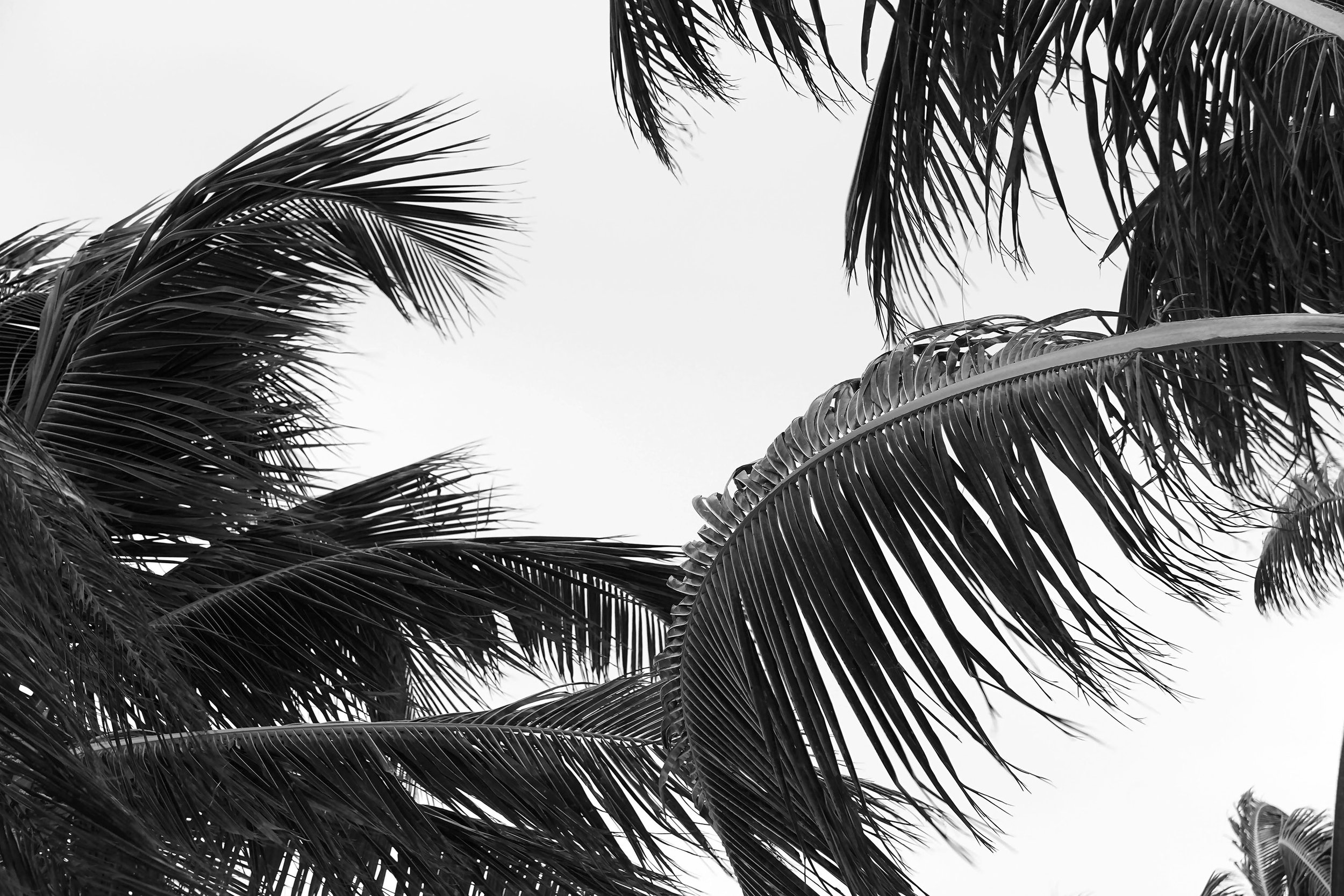 Black and White Abstract Palm Tree Photography