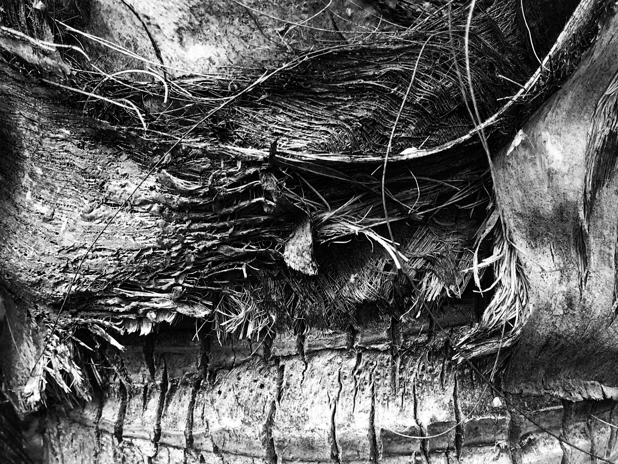 black_and_white_tree_photography.JPG