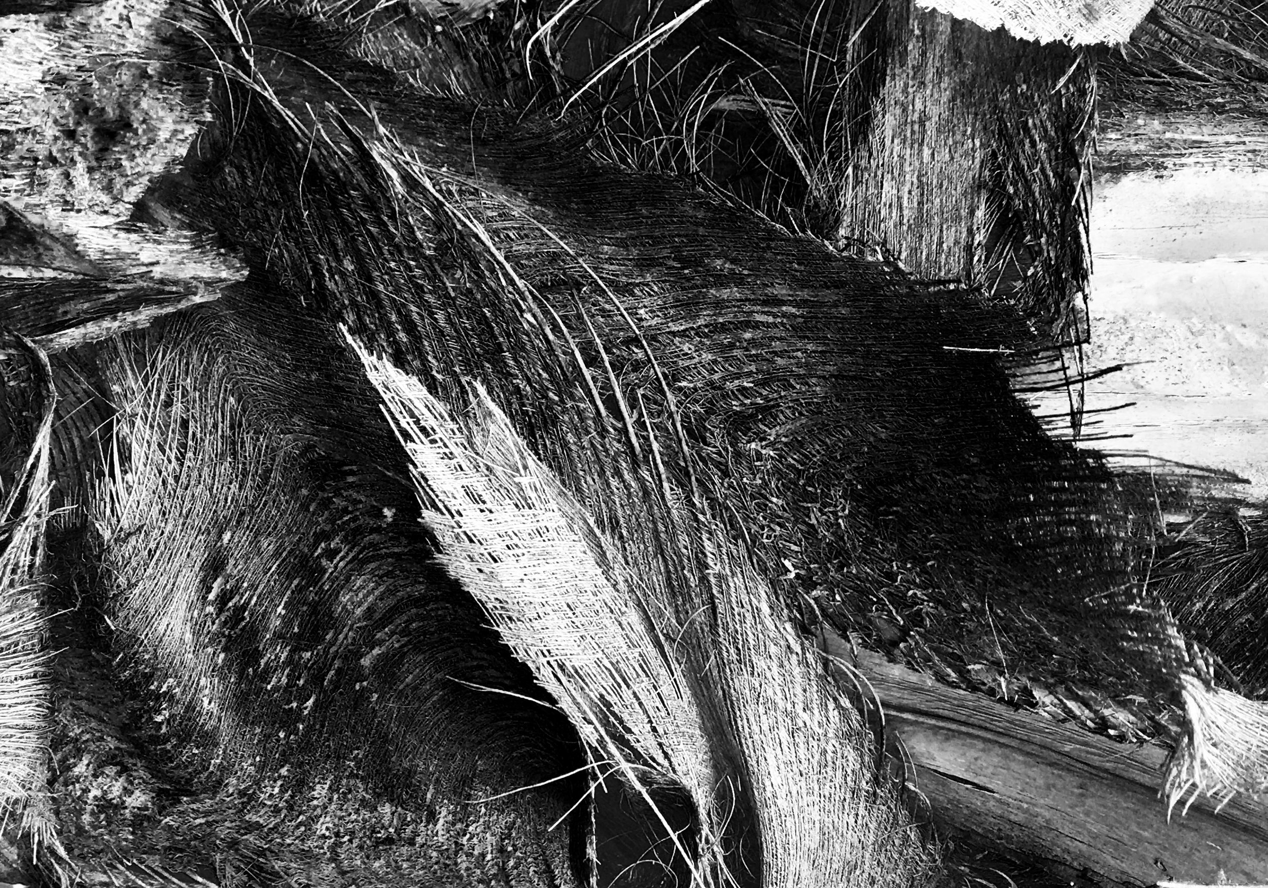 black_and_white_abstract_texture_photography.JPG