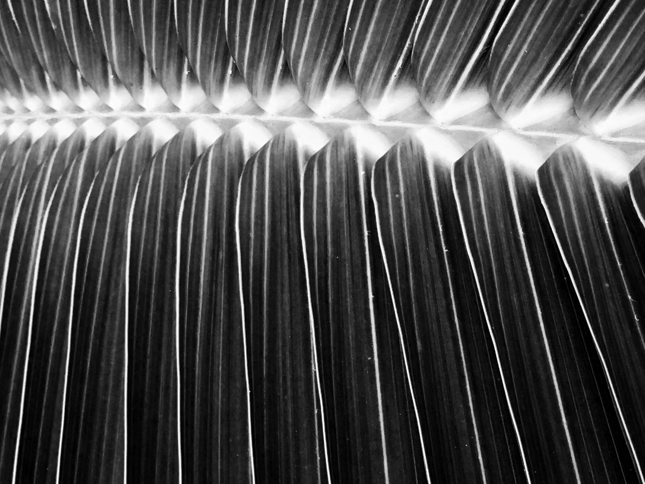 Abstract Palm Tree Leaf Photography