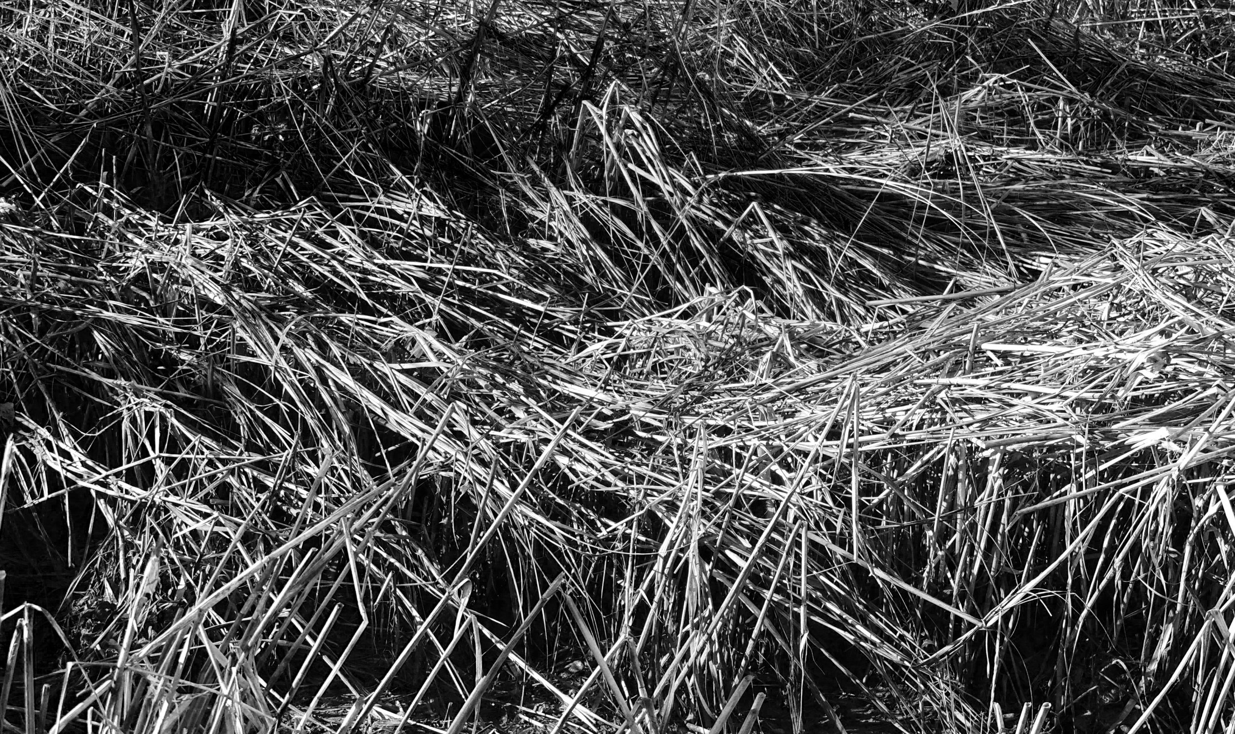 Black and White beach Straw photograph