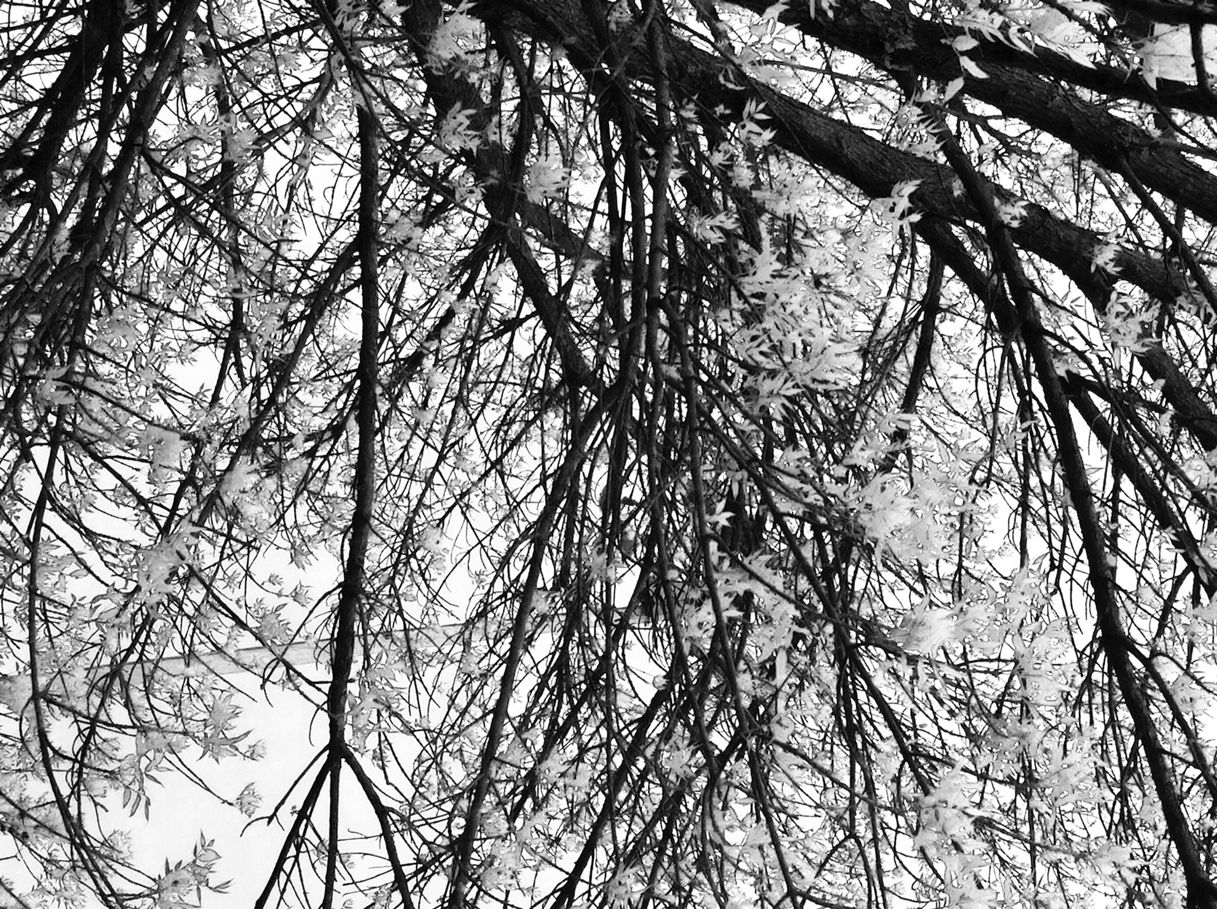 abstract tree photography