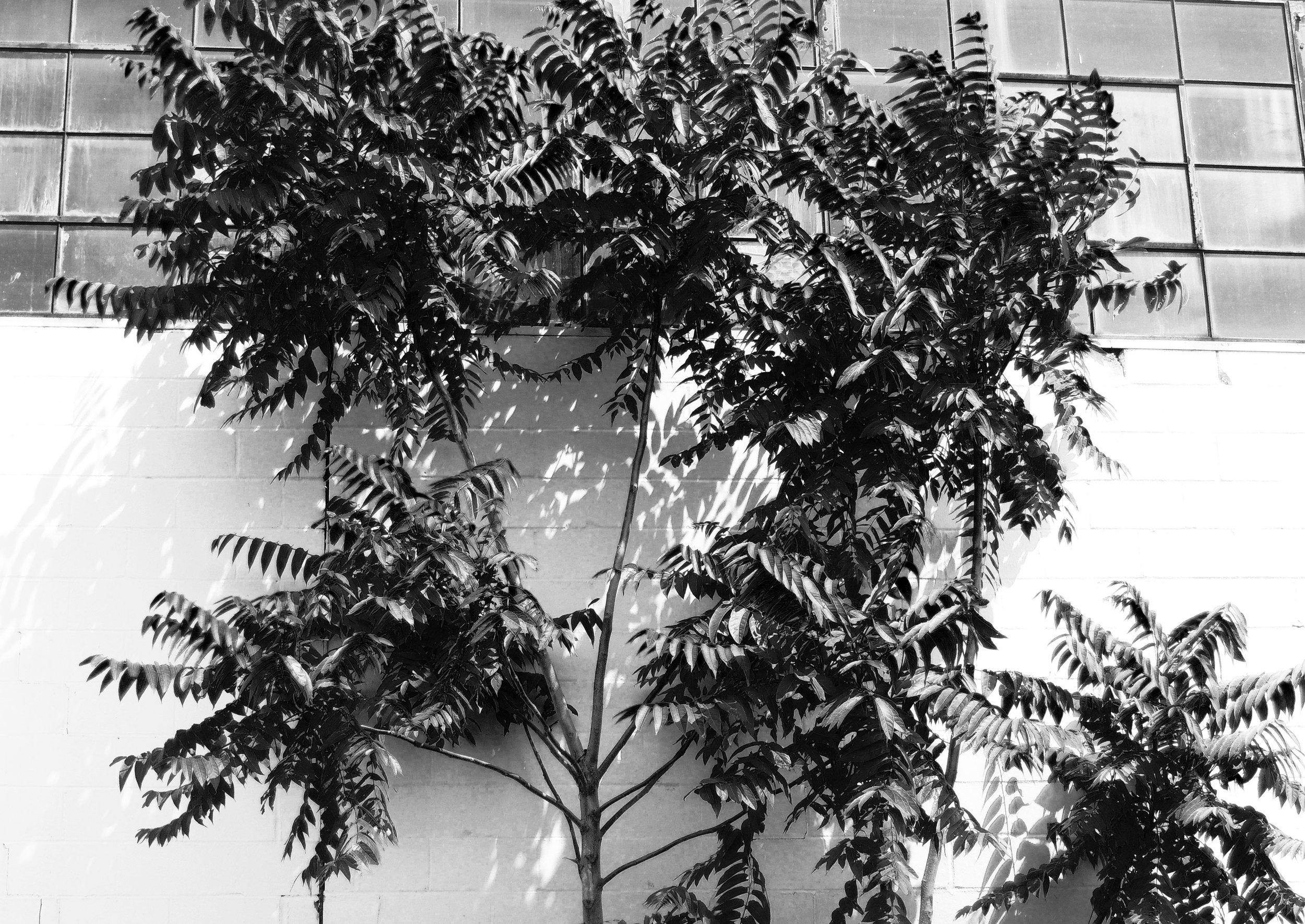 Black and White Urban Plant photograph