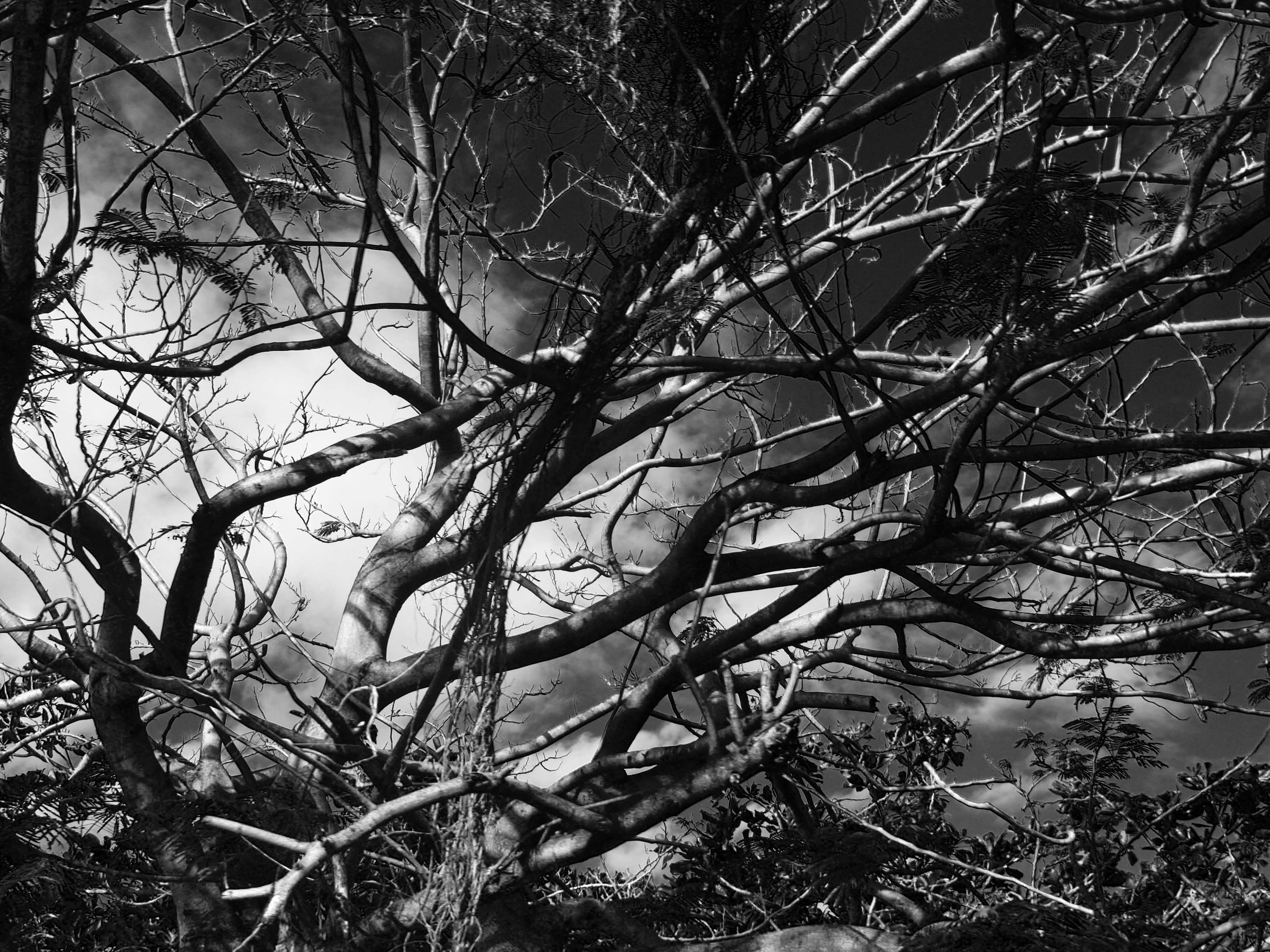 black_and_white_abstract_tree_photograph.jpg