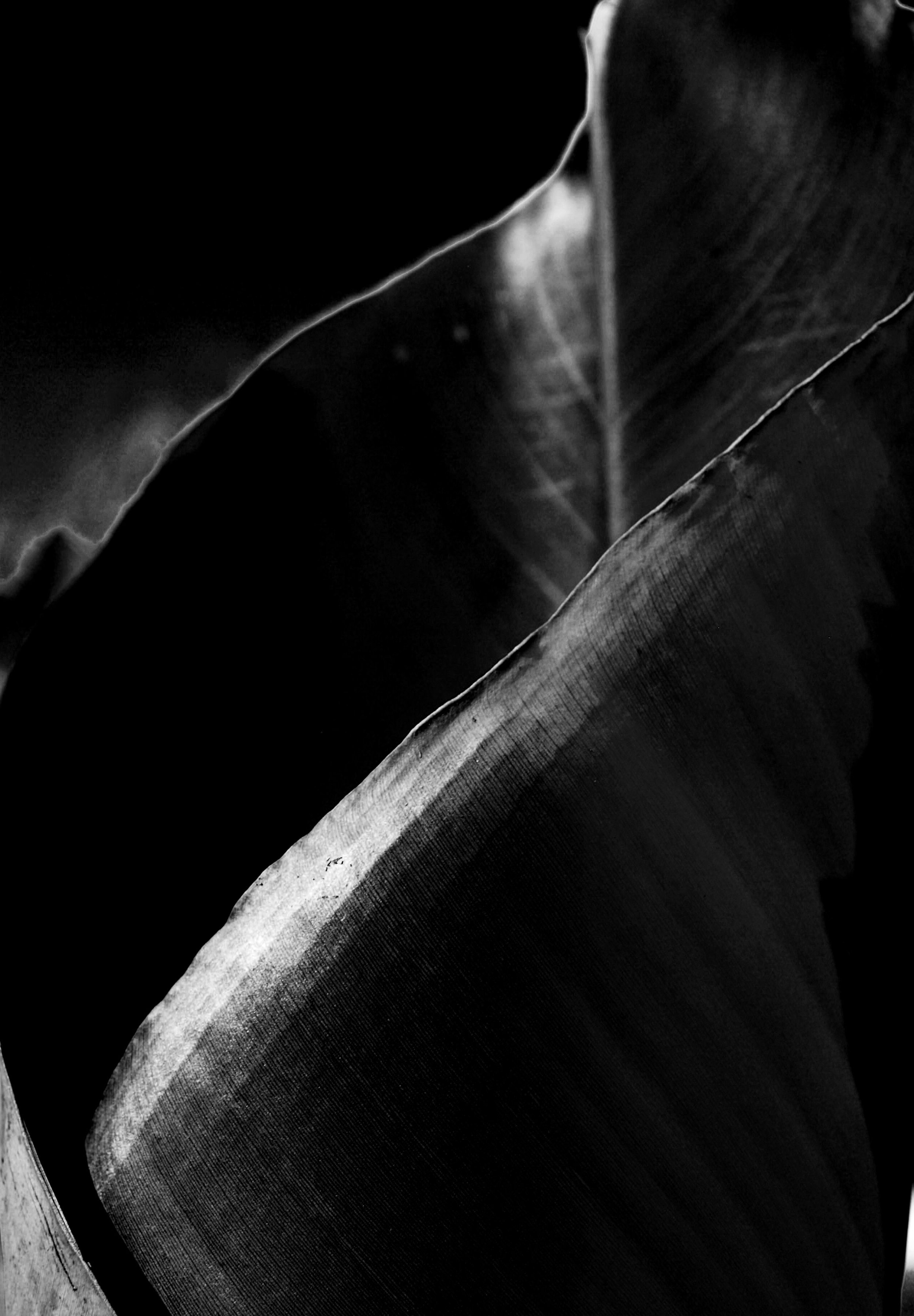 abstract black and white leaf photography
