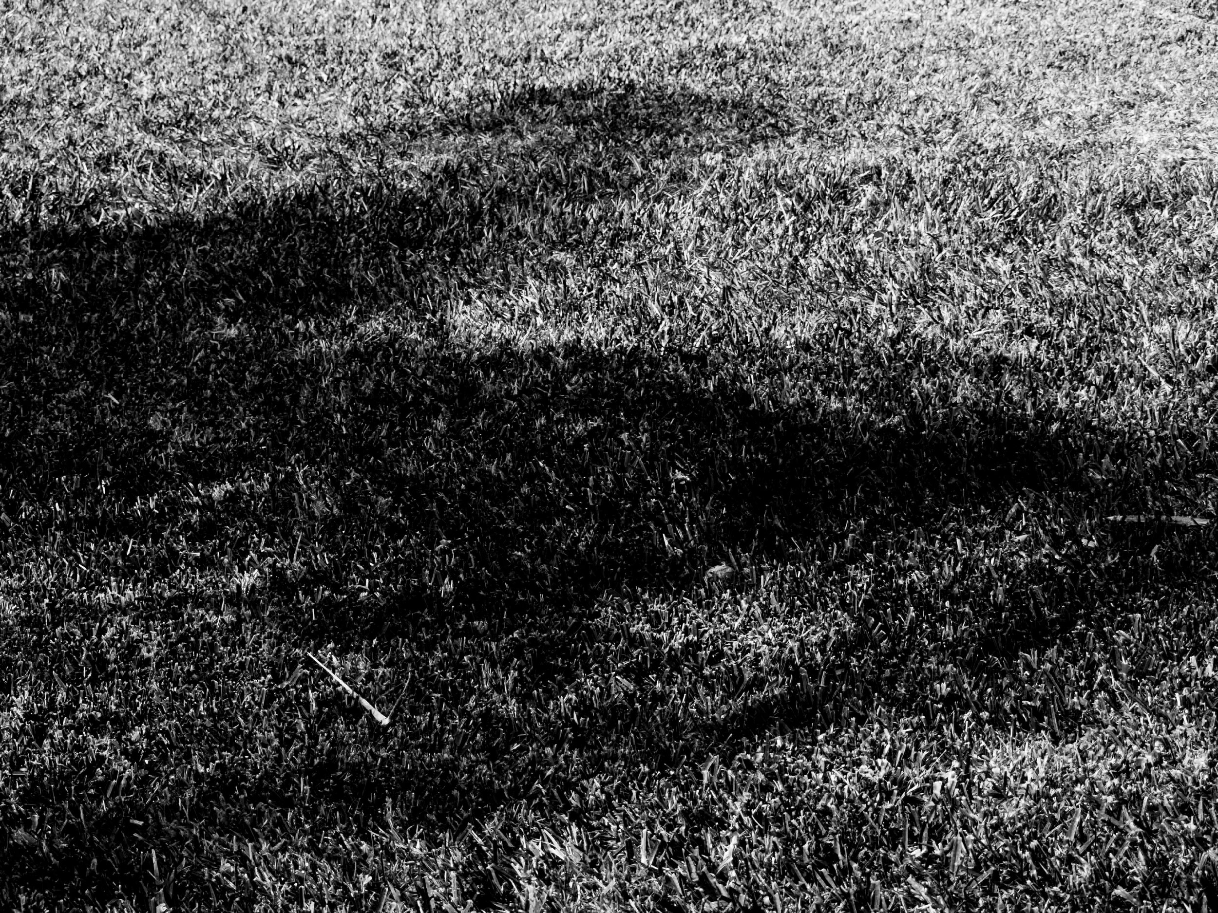 black and white grass photograph