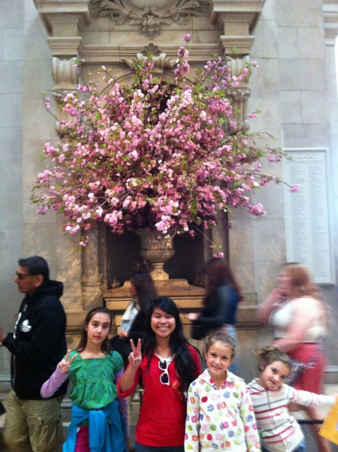 Fresh cherry blossoms at the Met.
