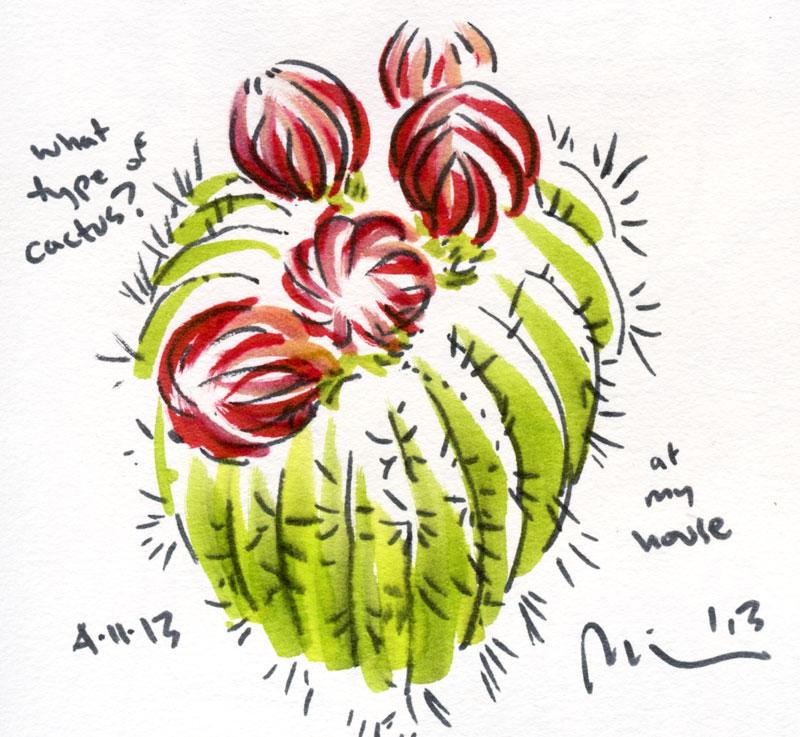 Cactus-flower-bud.jpg