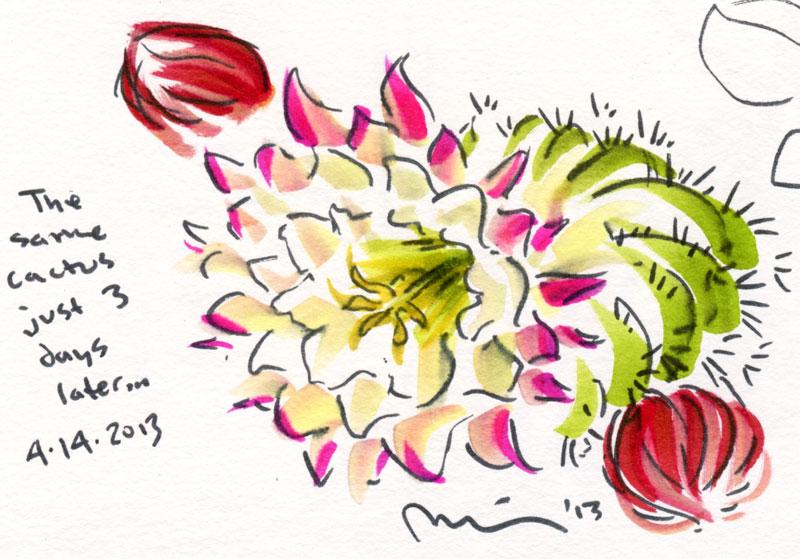 Cactus-flowering.jpg