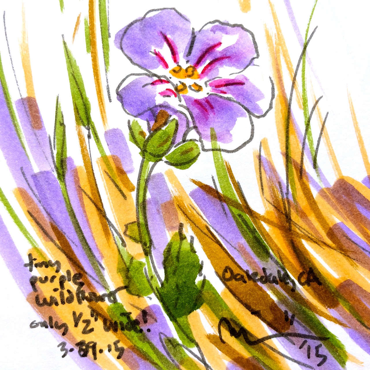 Oakdale flowers5.jpg