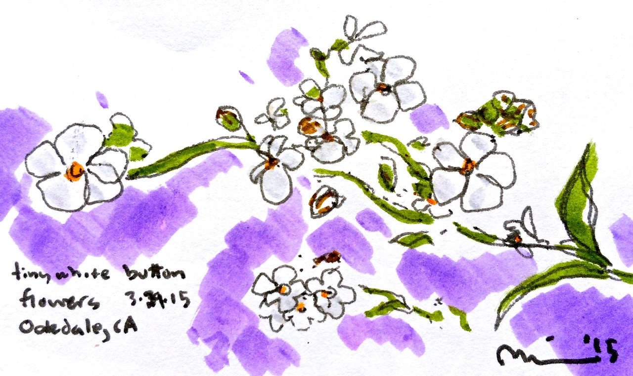 Oakdale flowers6.jpg