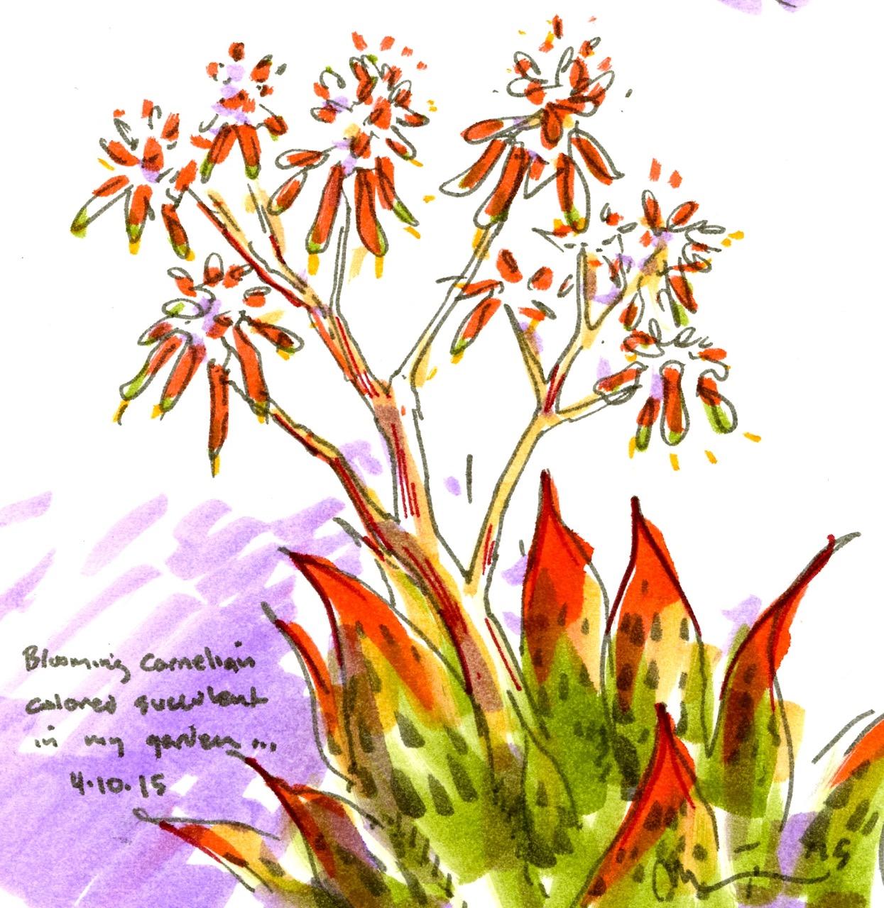 cactii n succulent 1.jpg