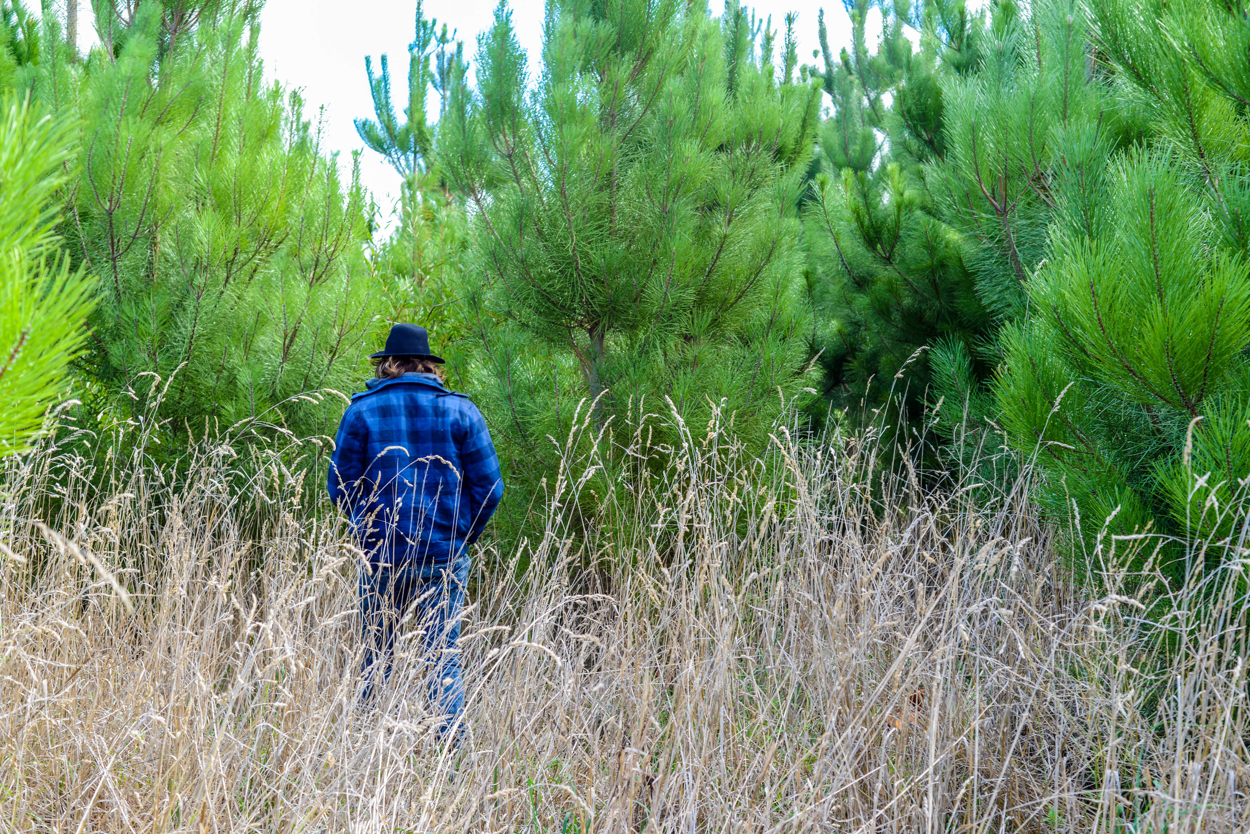 Bush walking through the pines in Mount Gambier, South Australia.