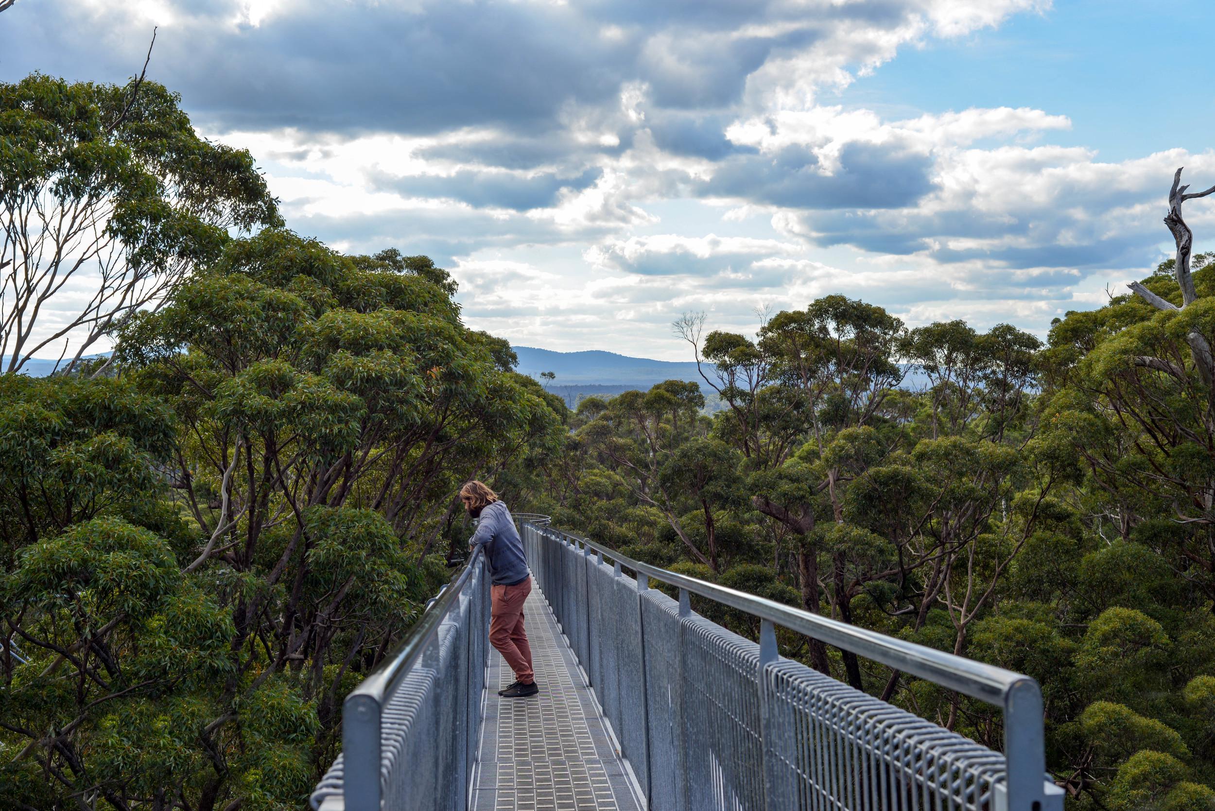 High in the tree tops, Western Australia.