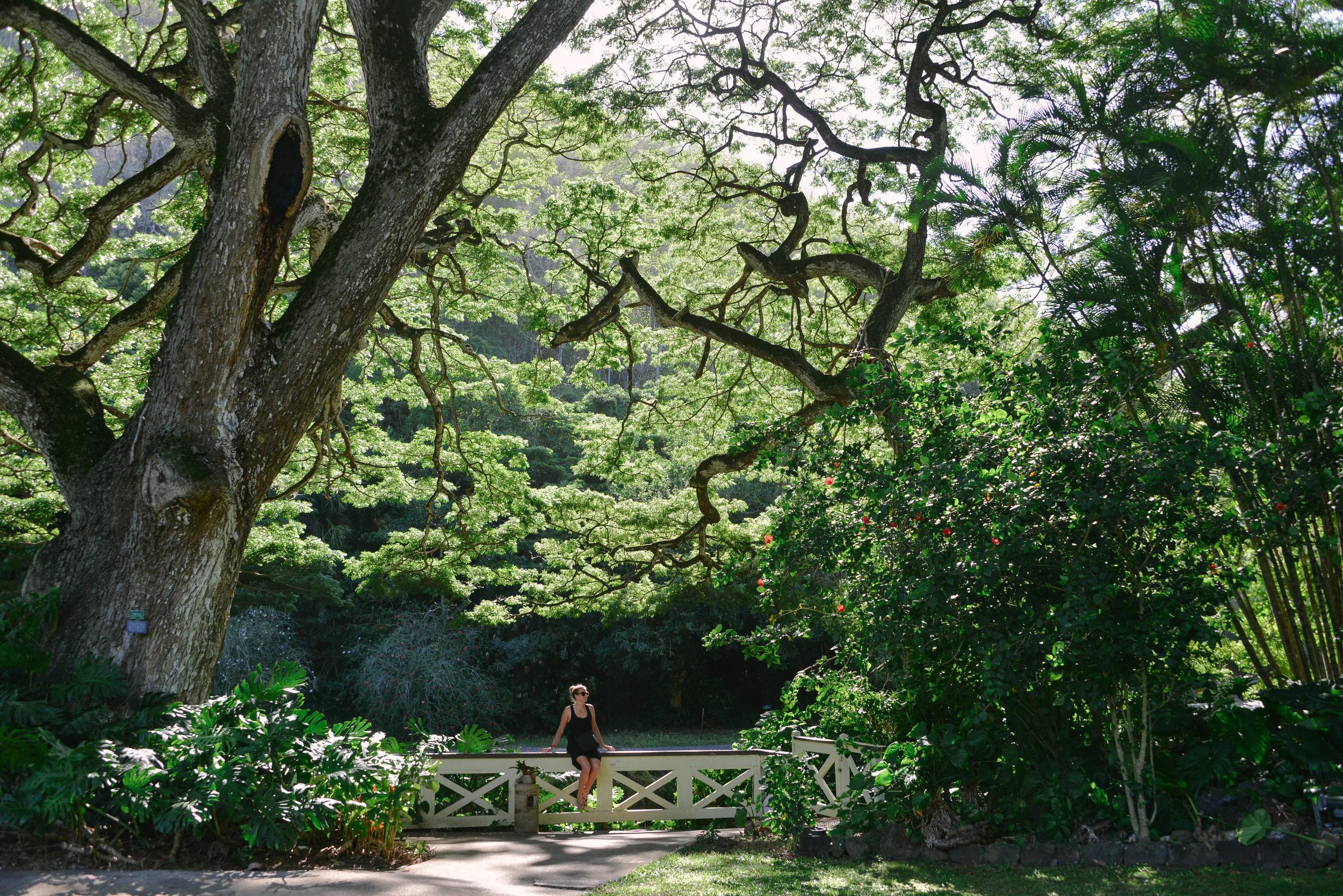 The beautiful gardens in Waimea Valley, Oahu.