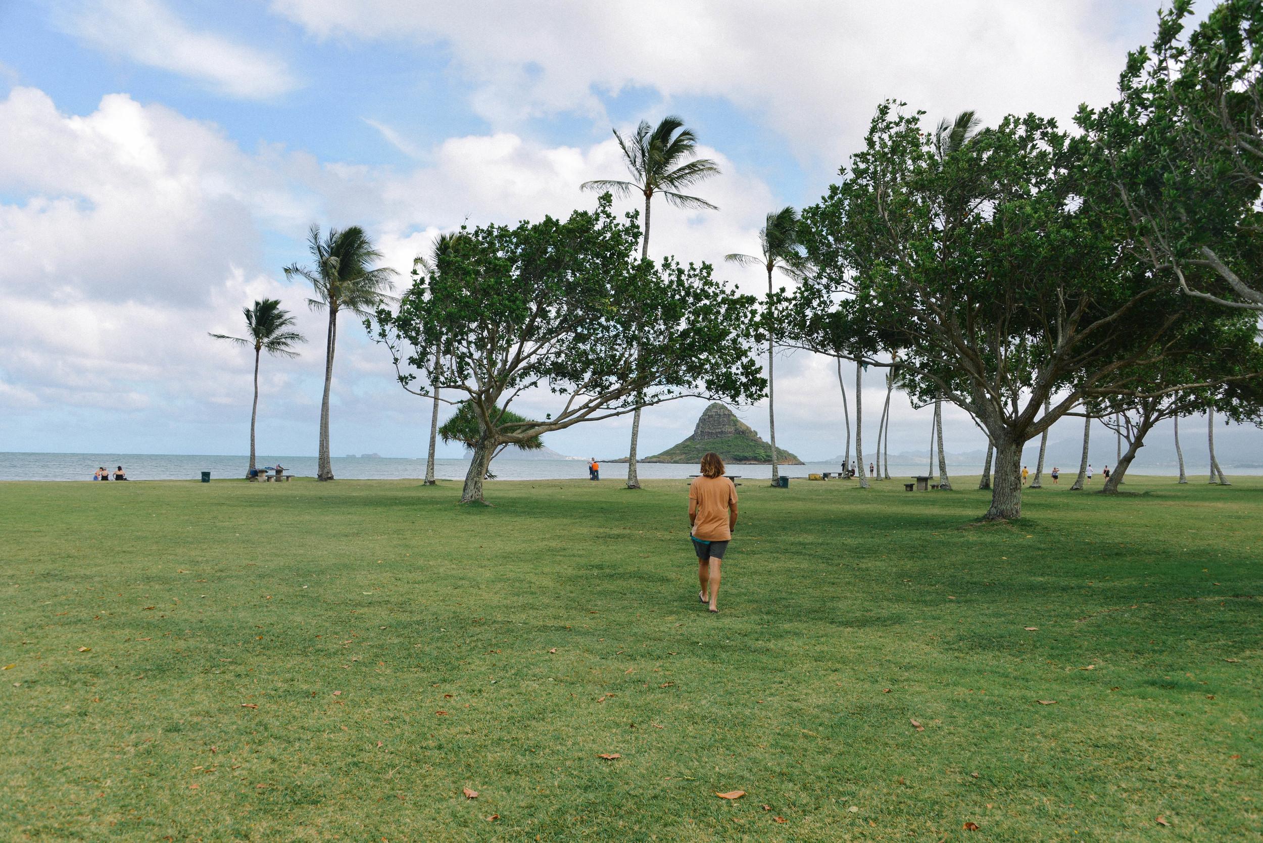 Afternoon walk in Kualoa Park, Oahu.