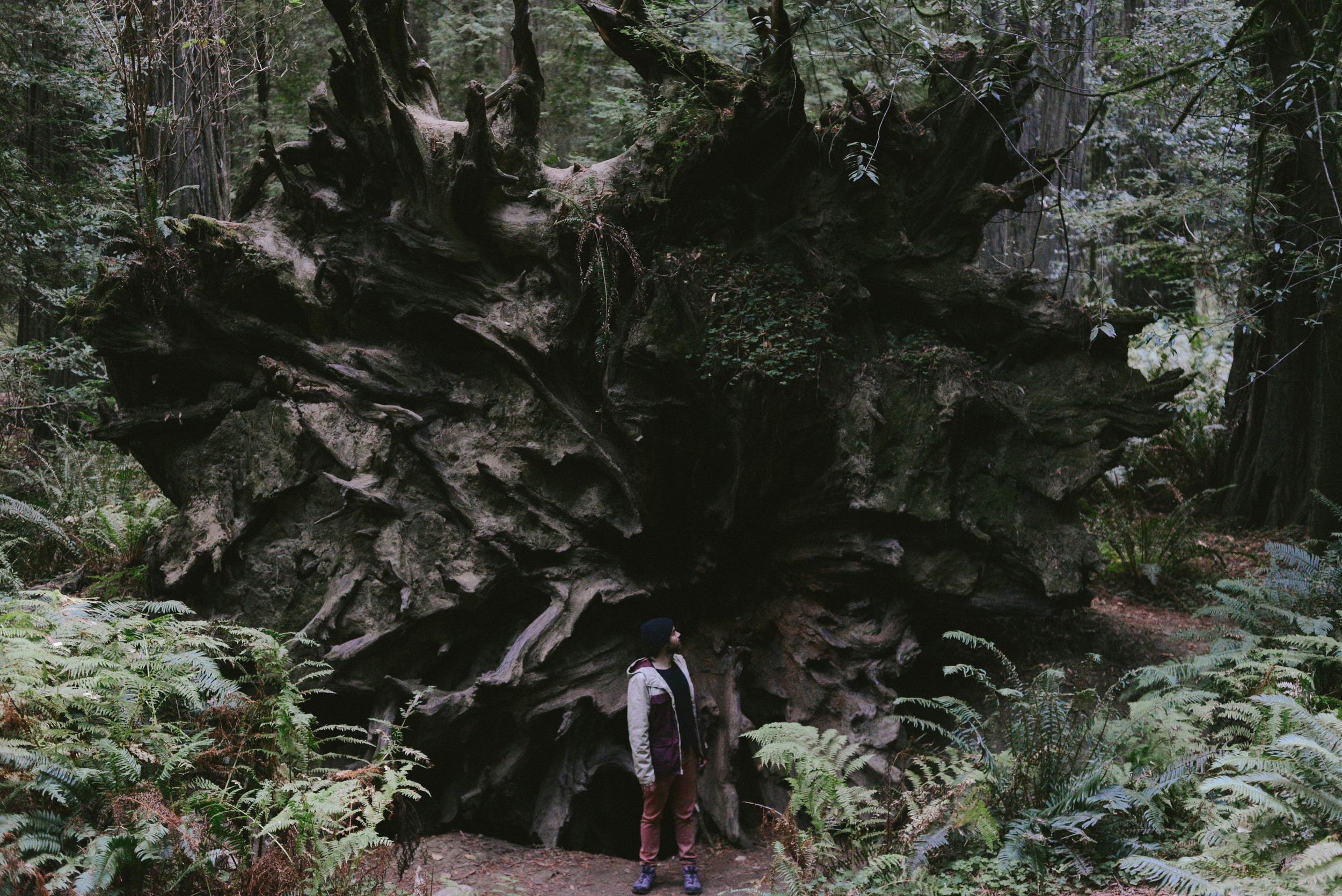 Jonny dwarfed by the 35ft base of a giant redwood tree.