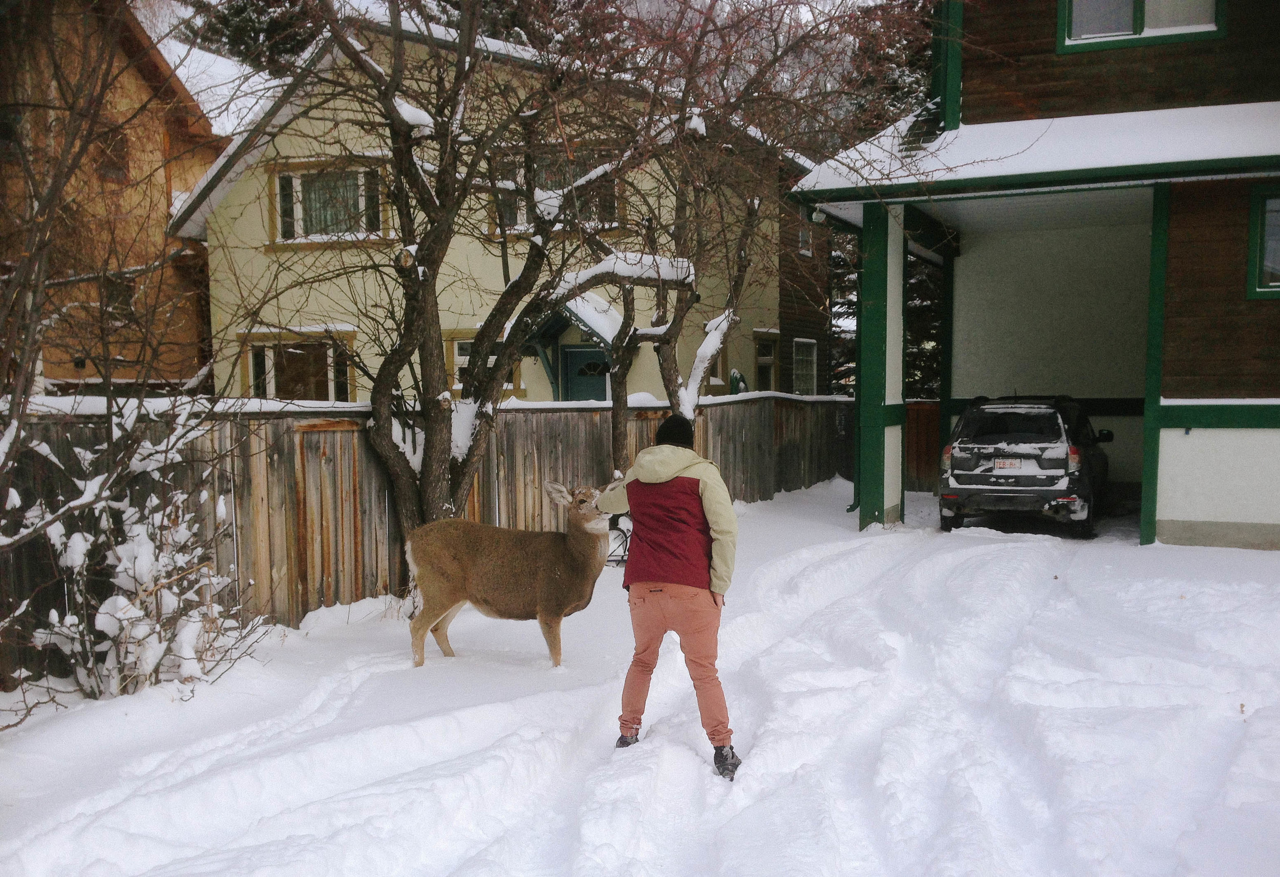 Jonny petting a deer in the backyard.